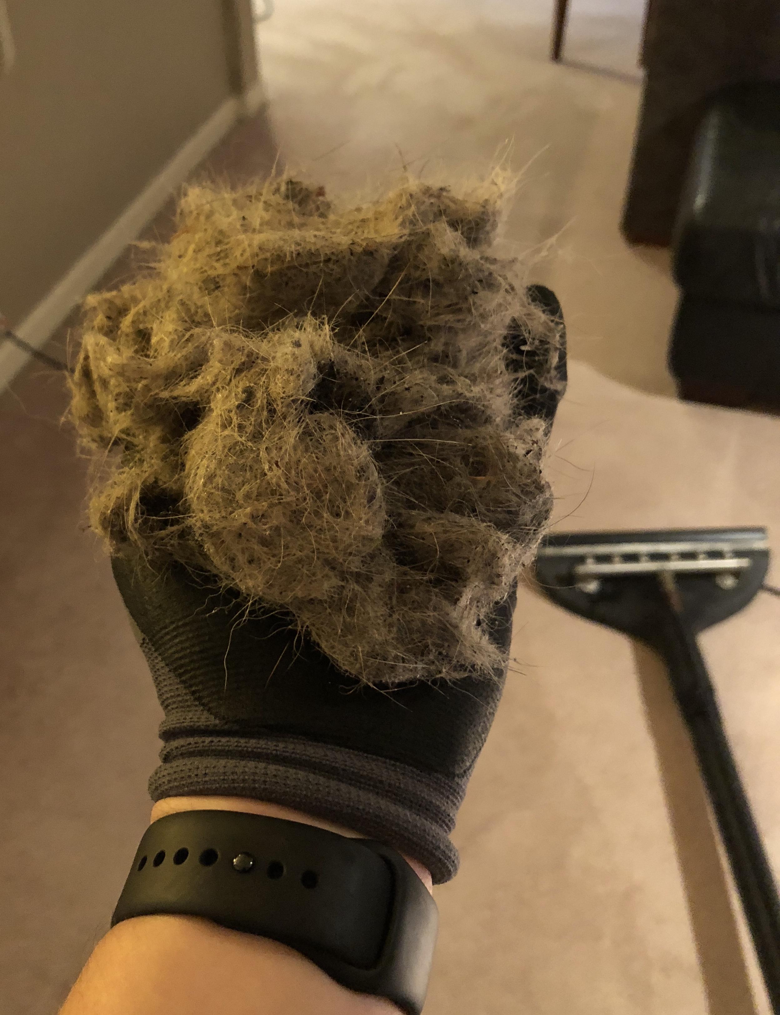 Pet hair removal Edmonds.jpg