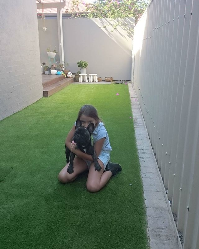 #greenlook77  #dogs synthetic grass