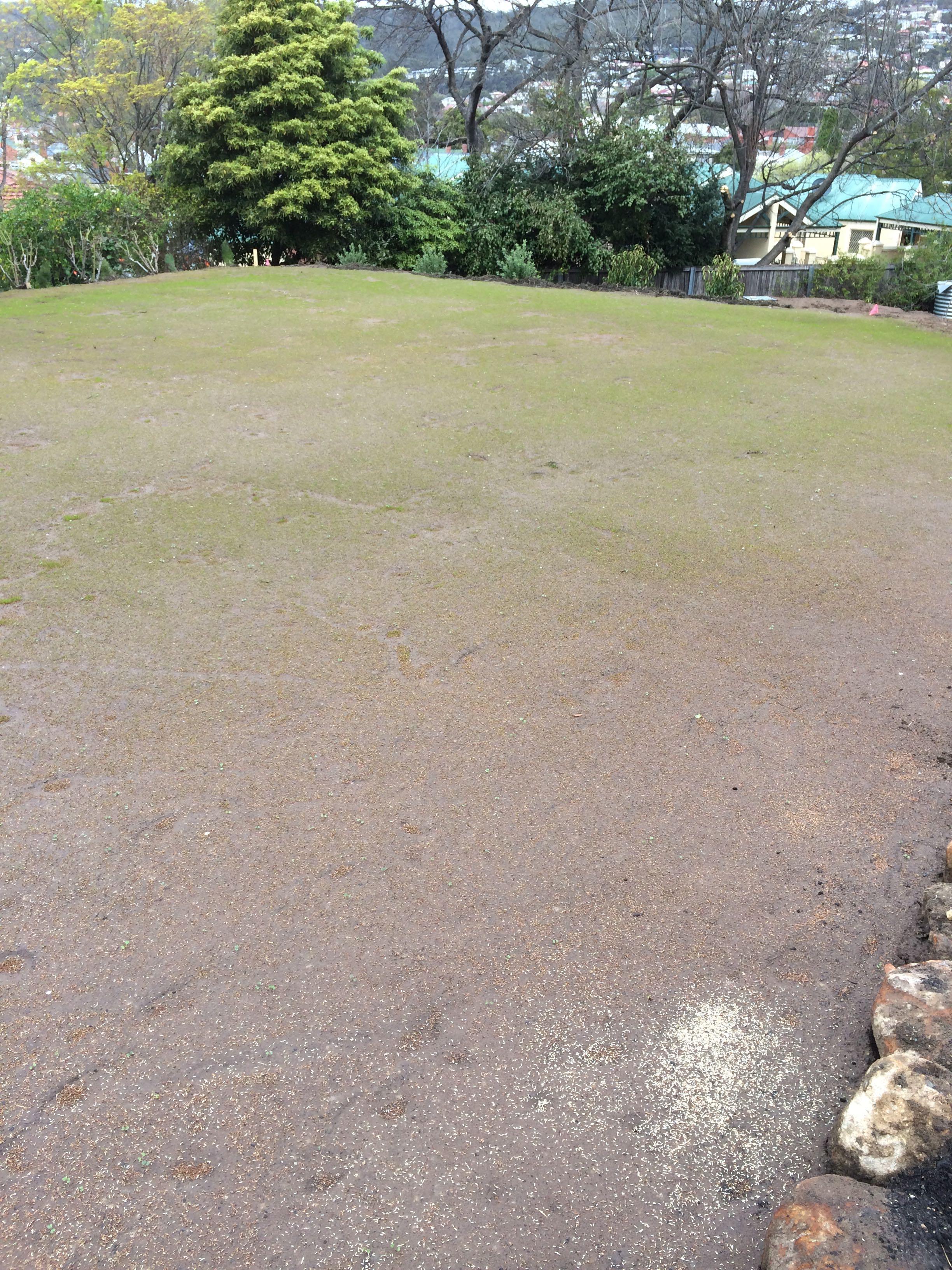 Garden 2014 - 4.jpg