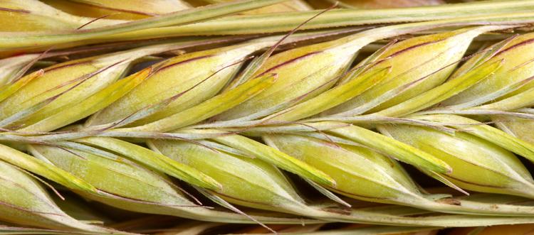 Bulk, Custom, and Wholesale Malted Grains