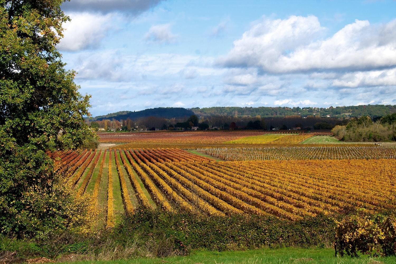 Vines-in-autumn.jpg