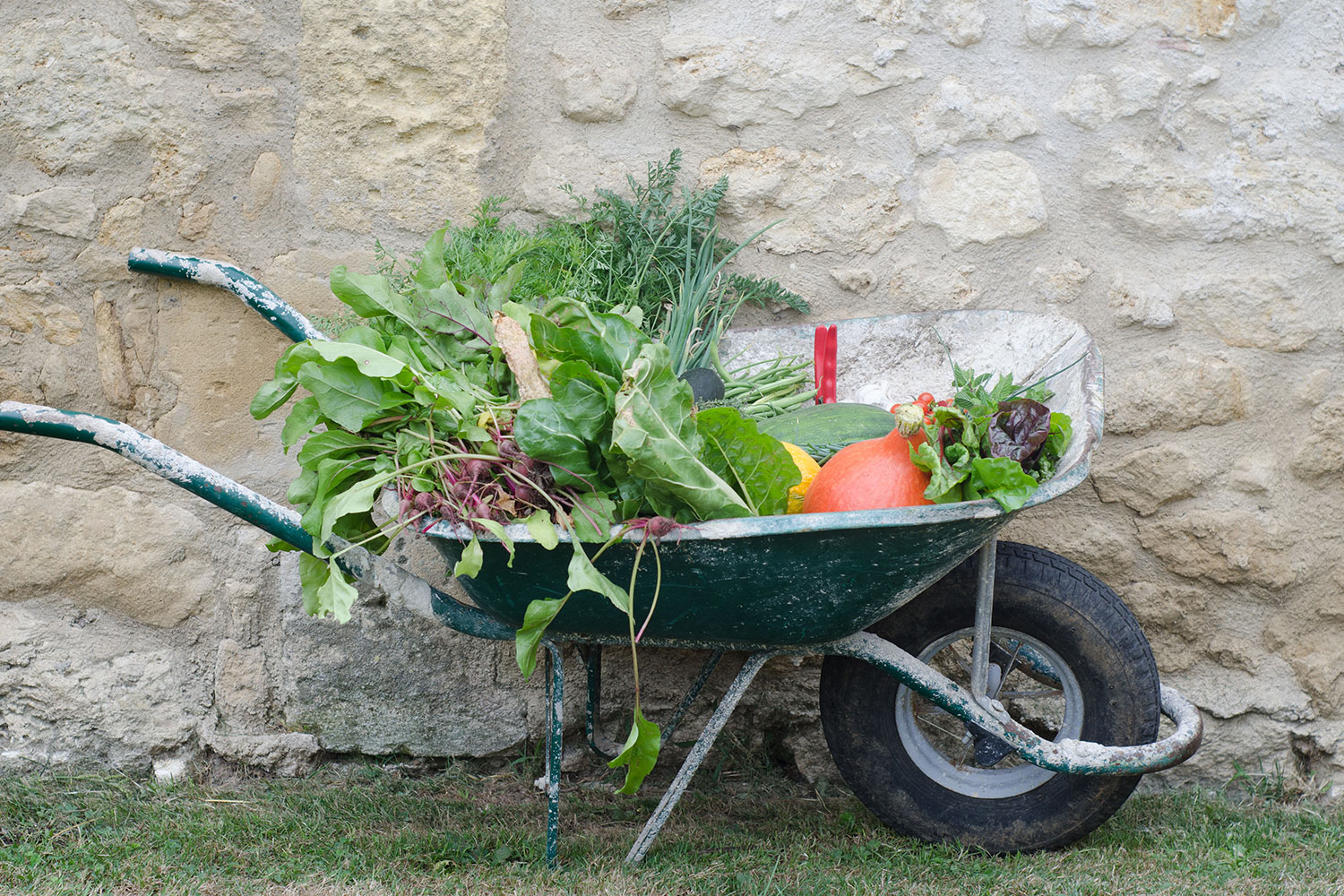 Wheelbarrow-veg.jpg