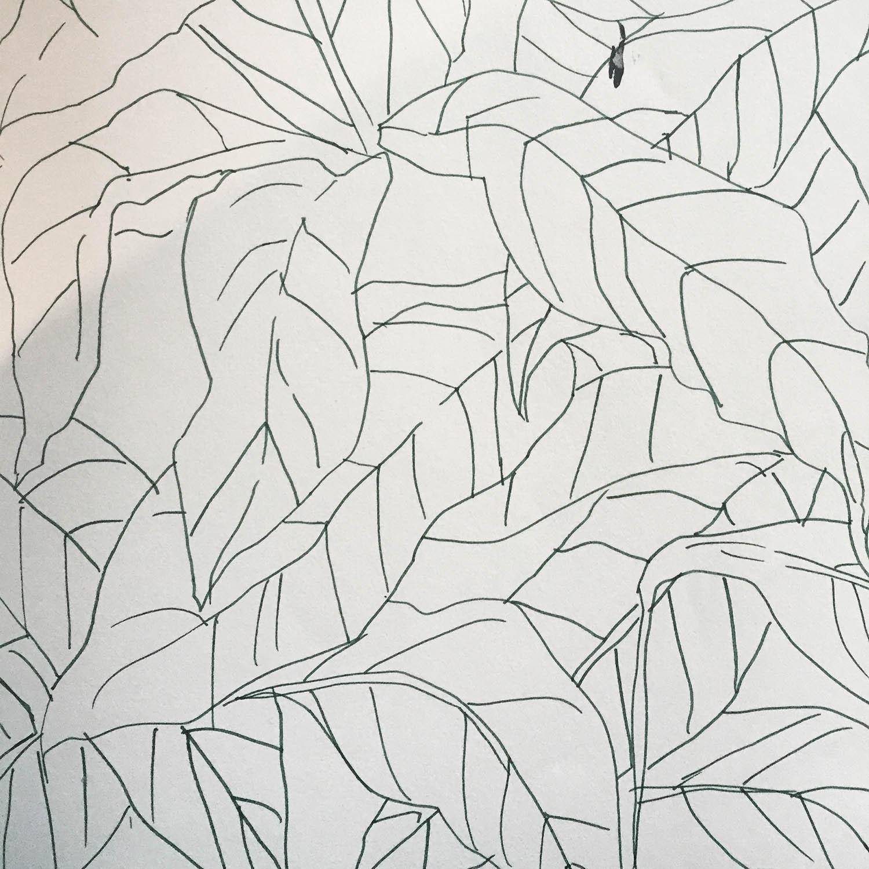 leafdrawinghicks.JPG