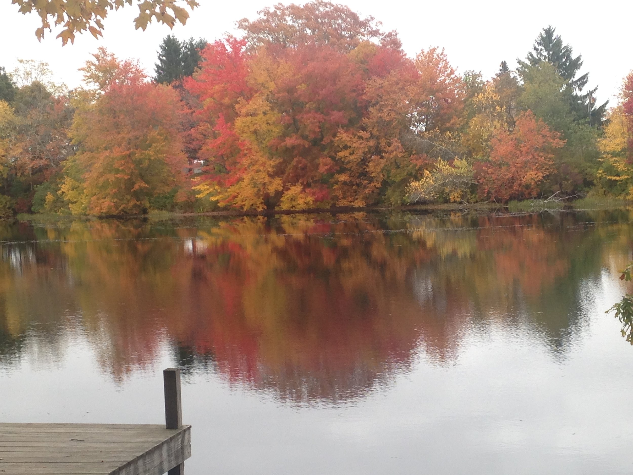 Fall foliage in Rhode Island — Megan Sumeracki