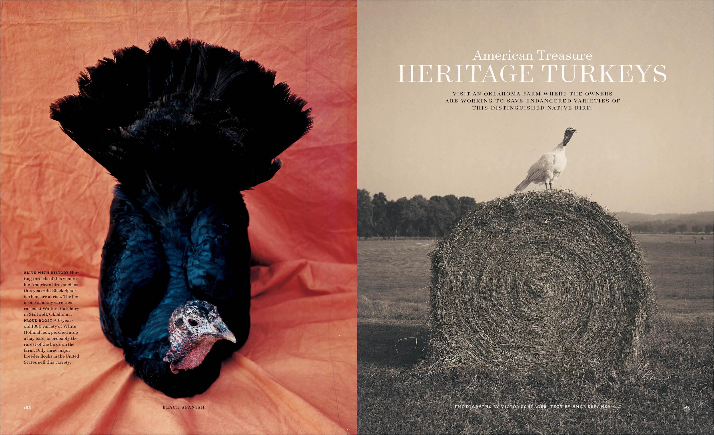 heritage turkeys copy.jpg