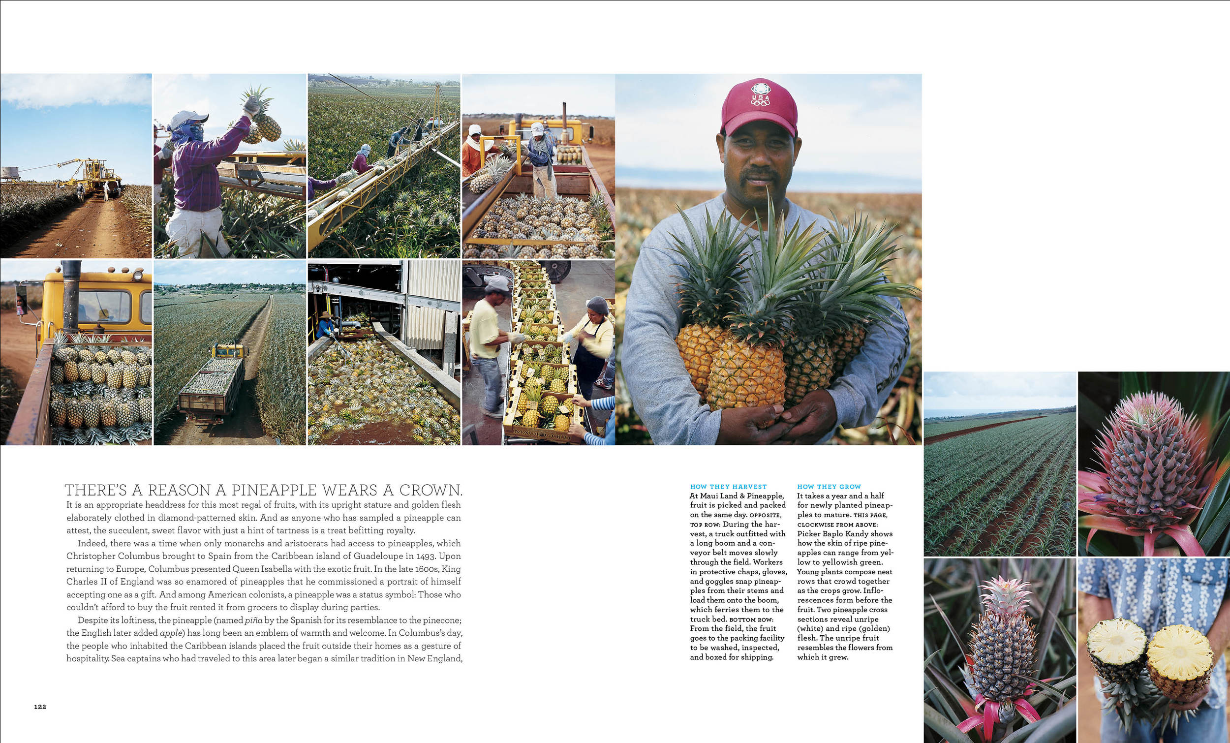 Pineapple2 copy.jpg