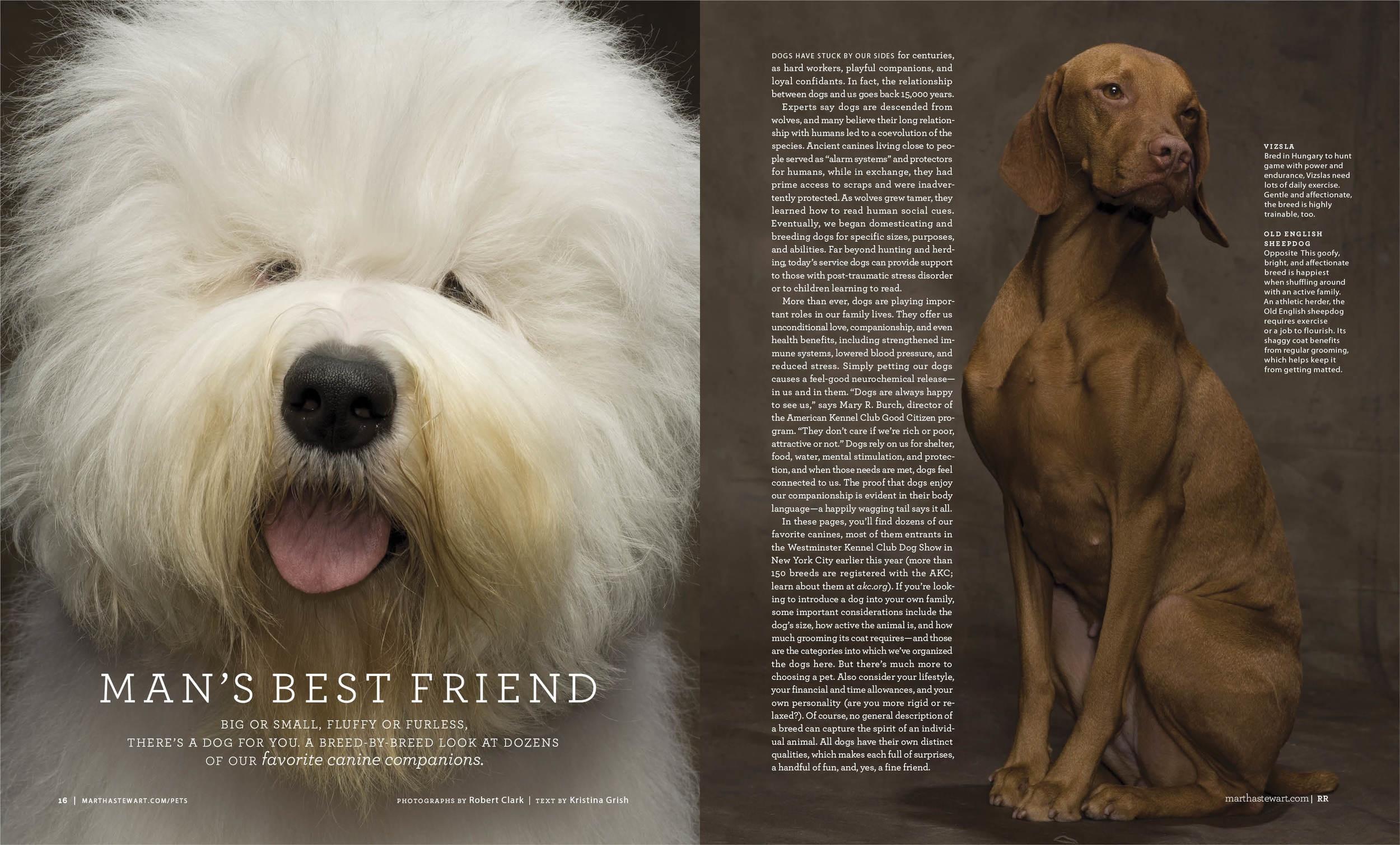 16-17 Man's Best Friend MSL1011-16P copy.jpg