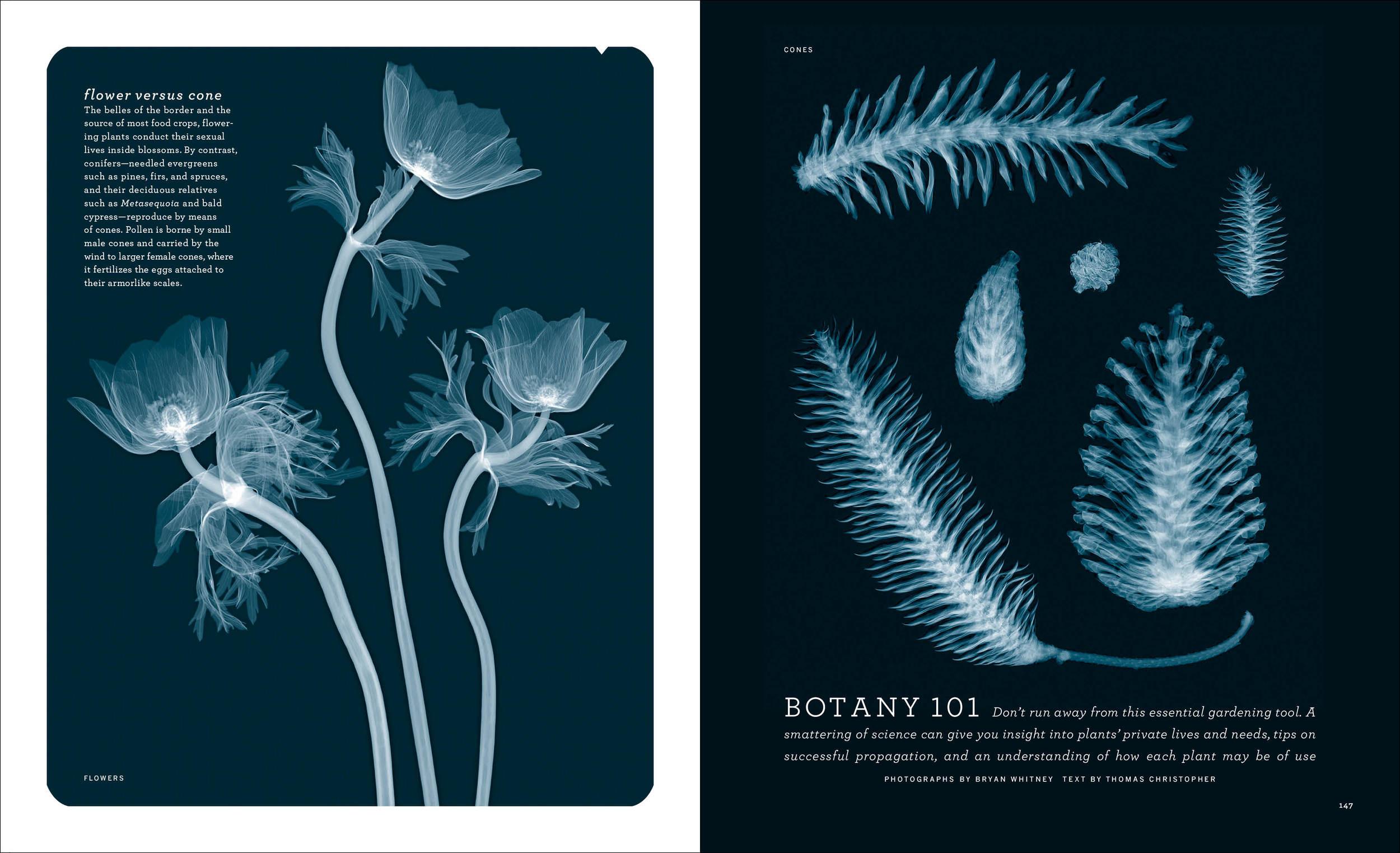 2003_03_Botany101 copy.jpg