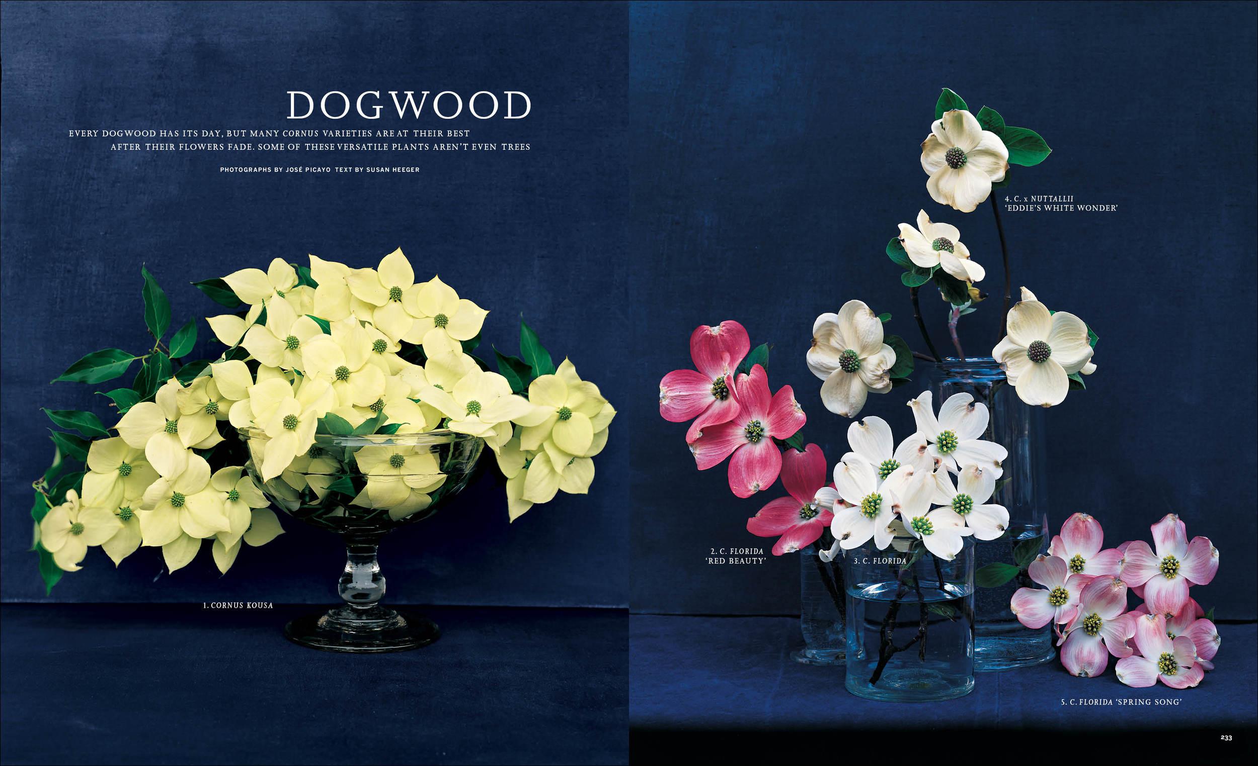 2002_05_Dogwoods copy.jpg
