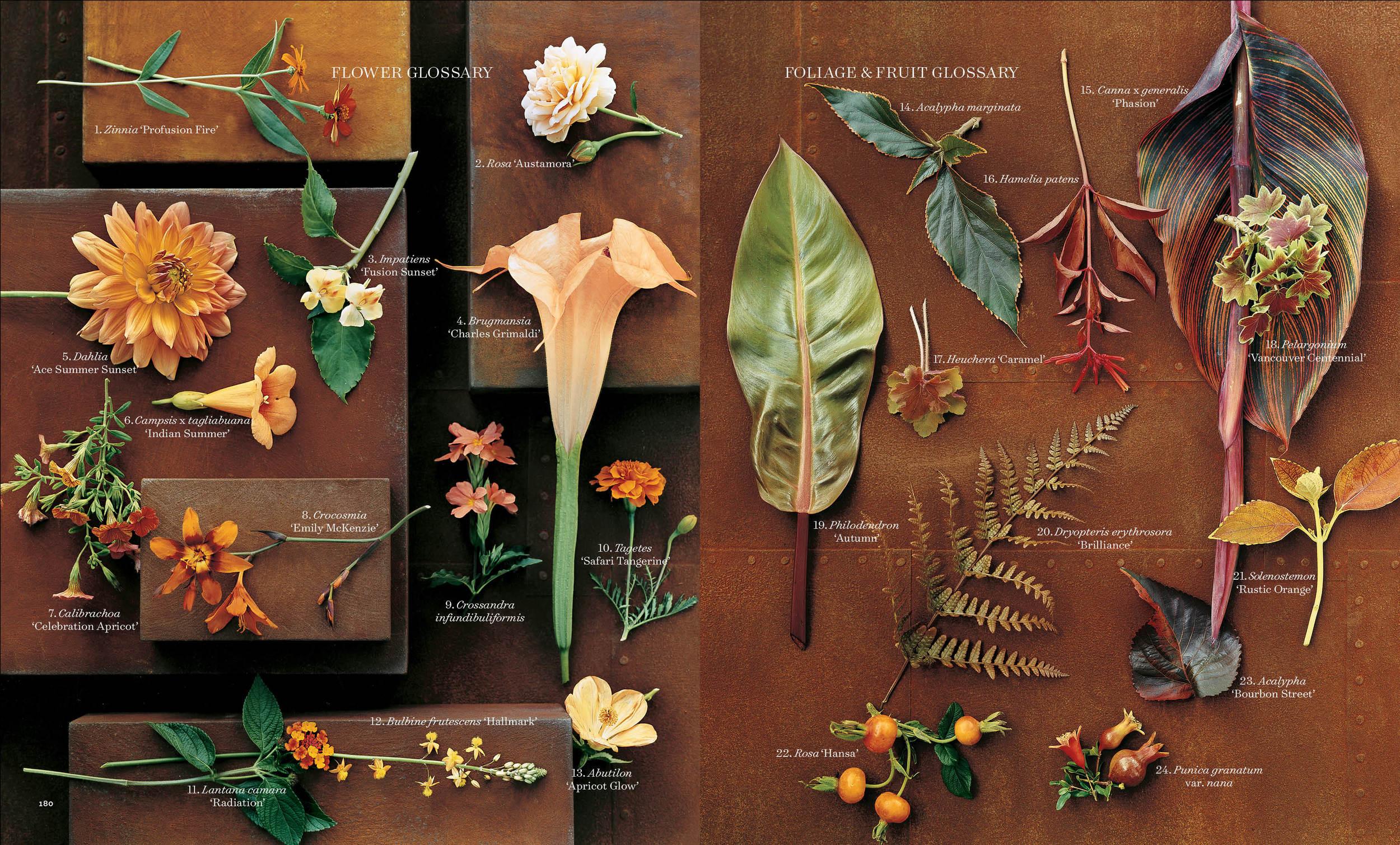 Orange Flowers3 copy.jpg