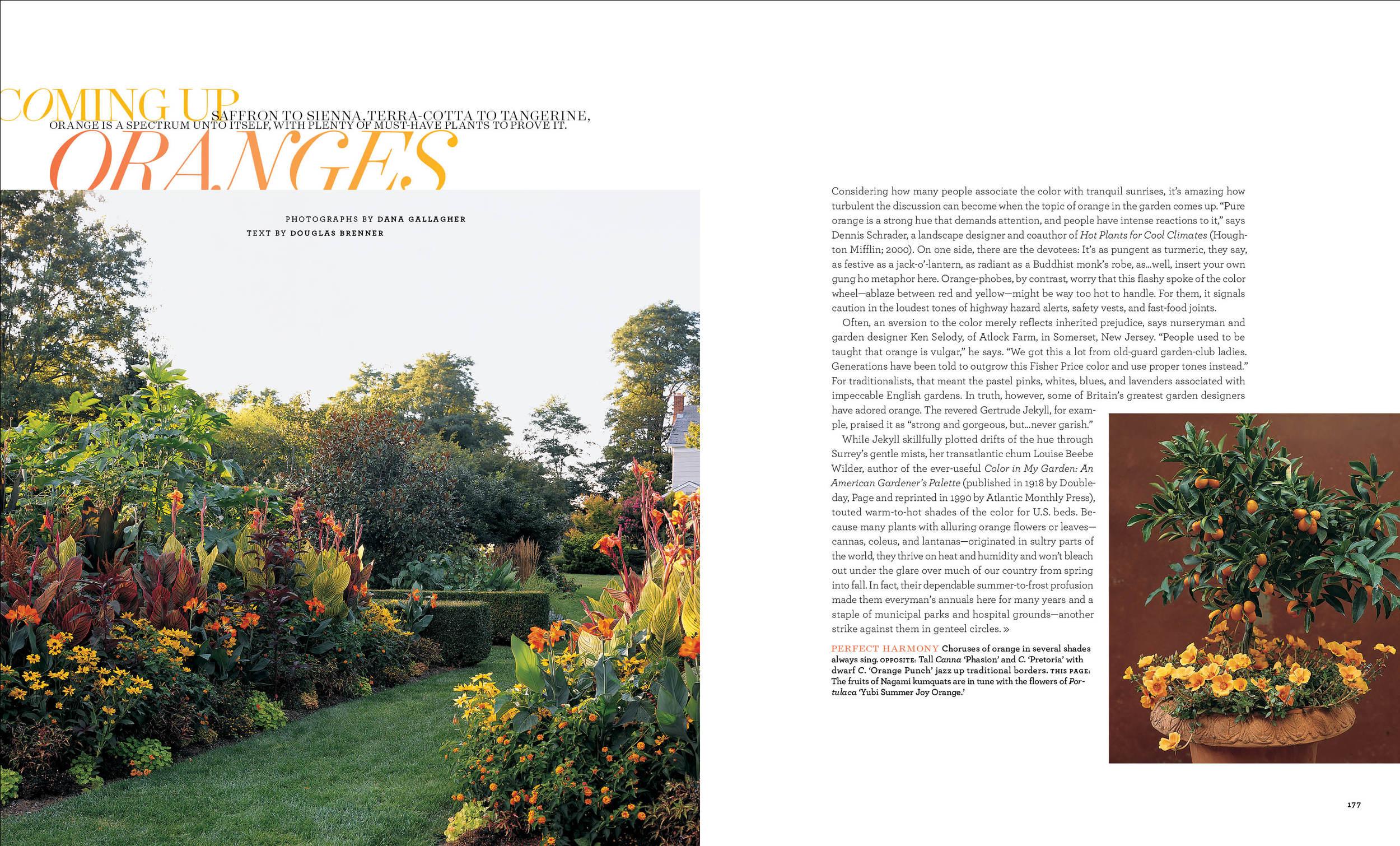 Orange Flowers copy.jpg