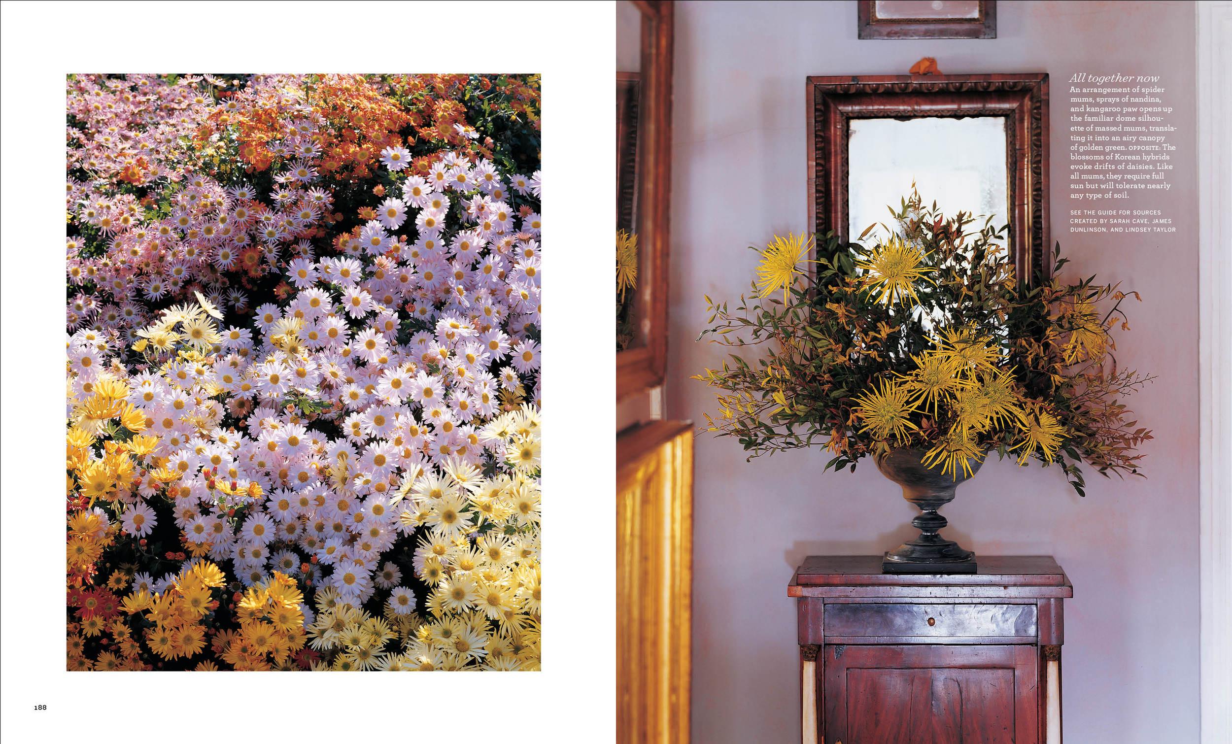 Chrysanthenum4 copy.jpg