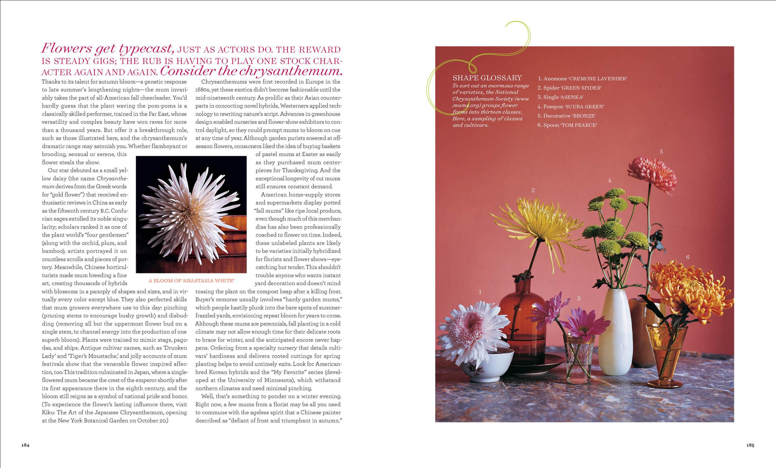Chrysanthenum2 copy.jpg