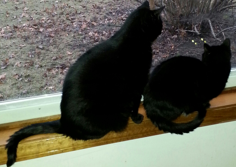 Jet and Raven, my feline companions, enjoy watching the show that nature presents in our own backyard.