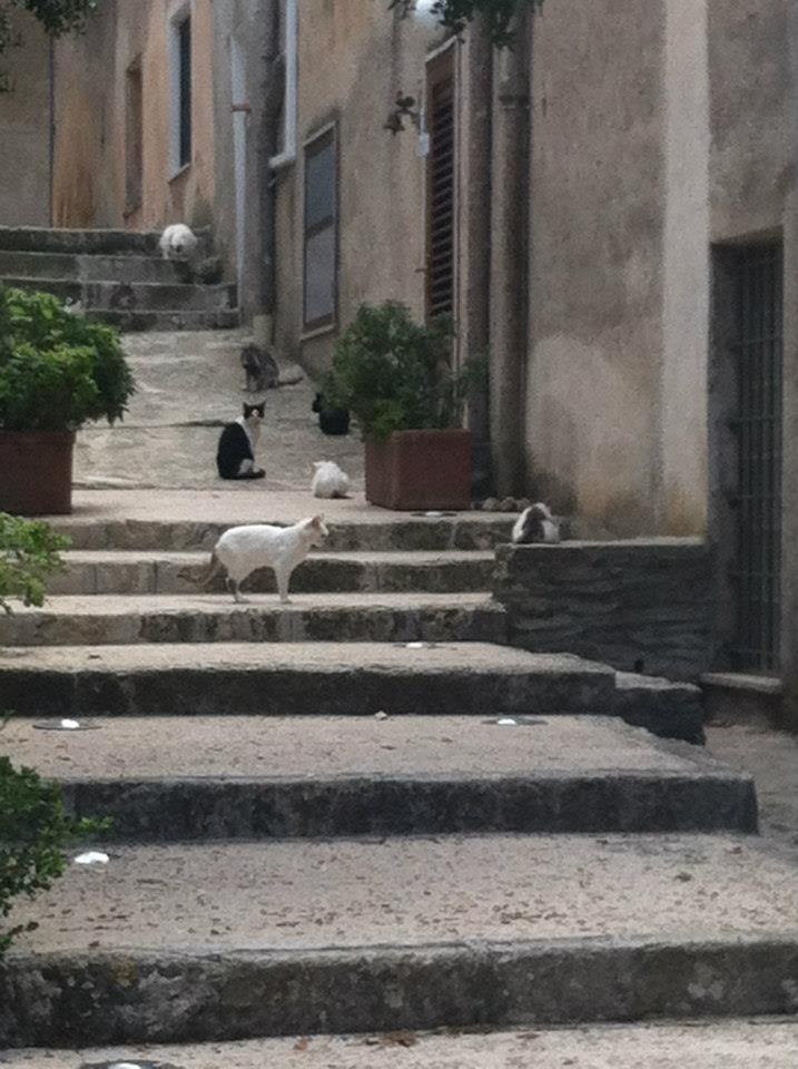 ericecats.jpg