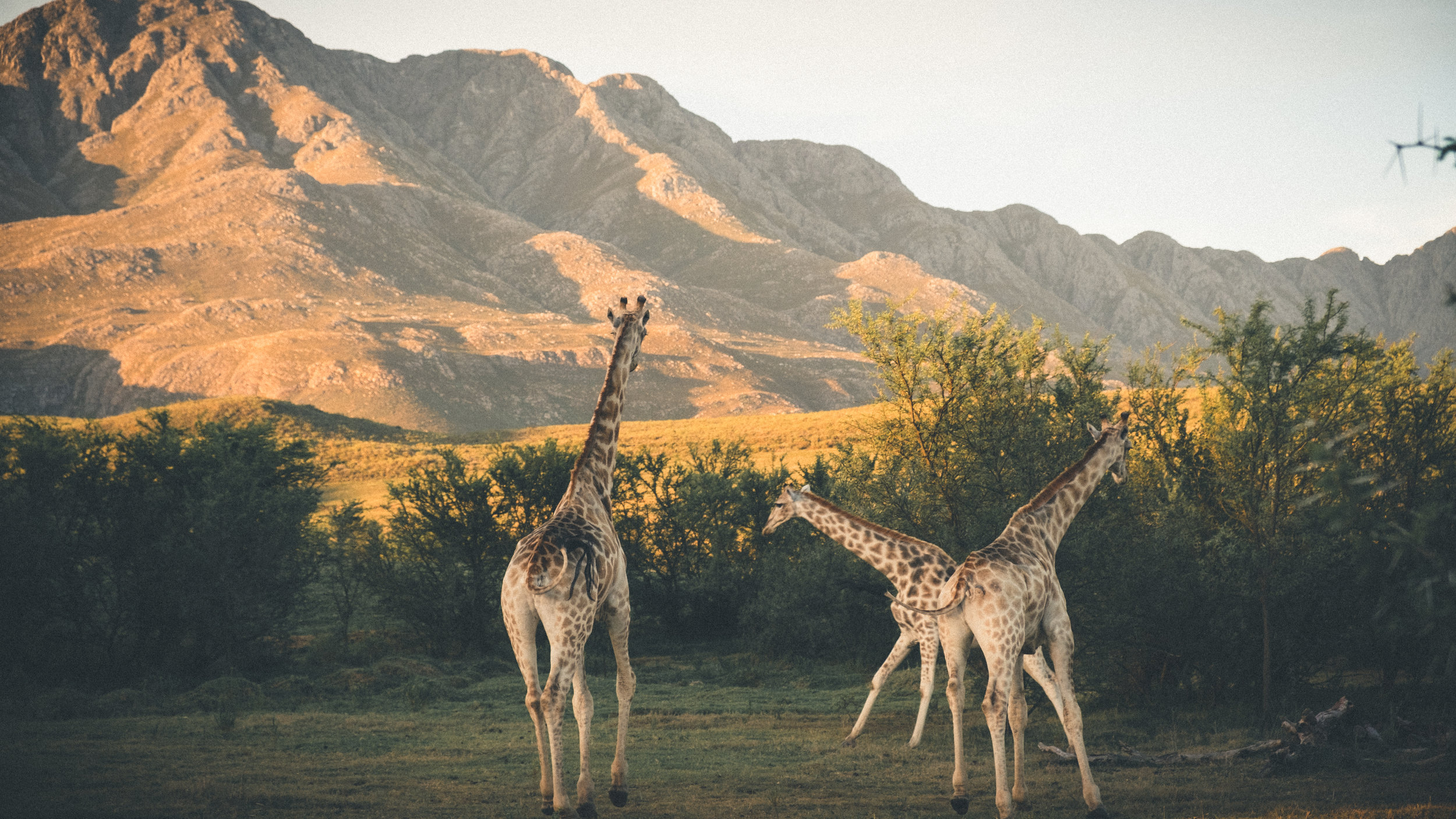WESTERN CAPE, SOUTH AFRICA