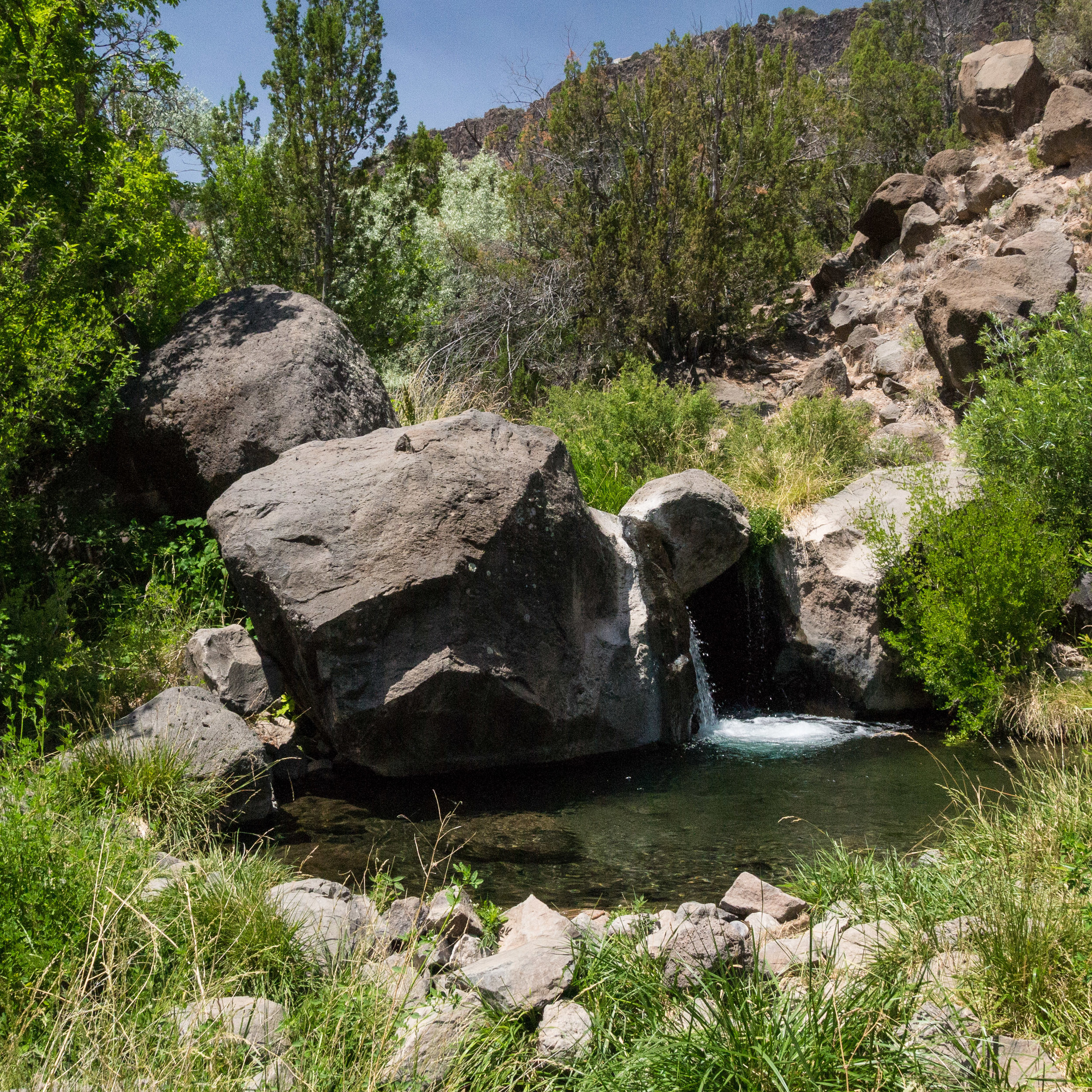 Pajarito Spring in White Rock Canyon. Photo: Reid Priedhorsky.