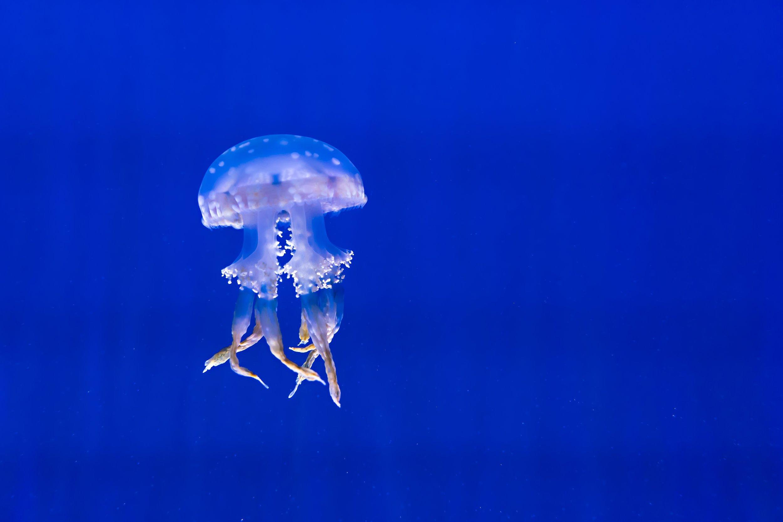 aquarium-1850999.jpg