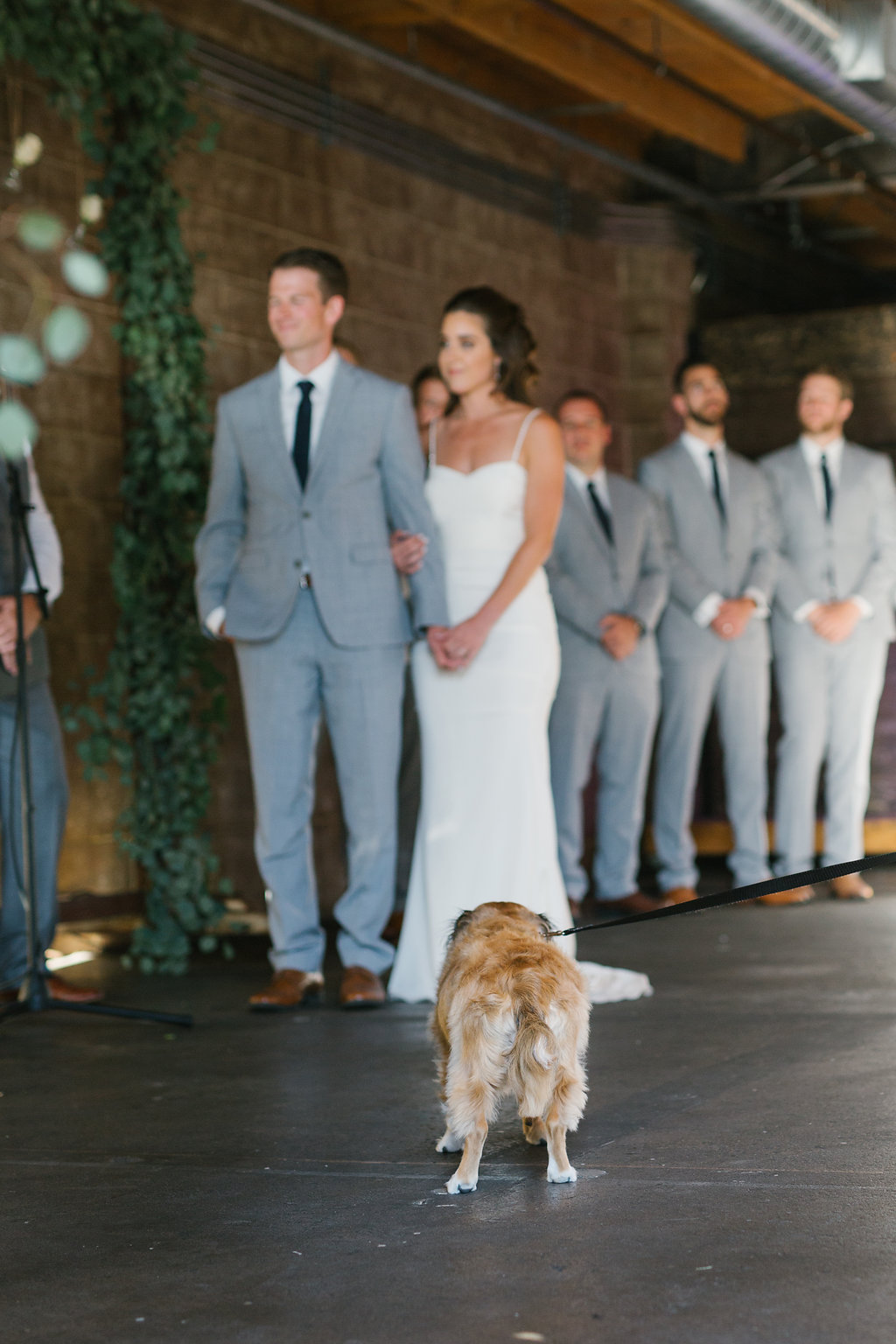 wedding puppy.jpg