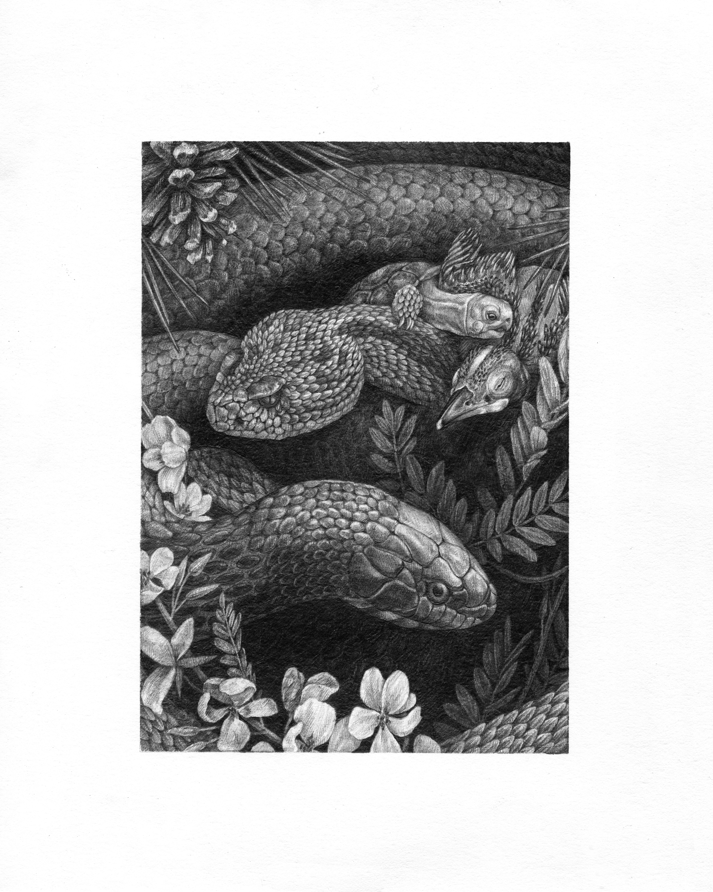 "Longleaf Pine , Graphite on Paper, 2016, 8"" x 10"""