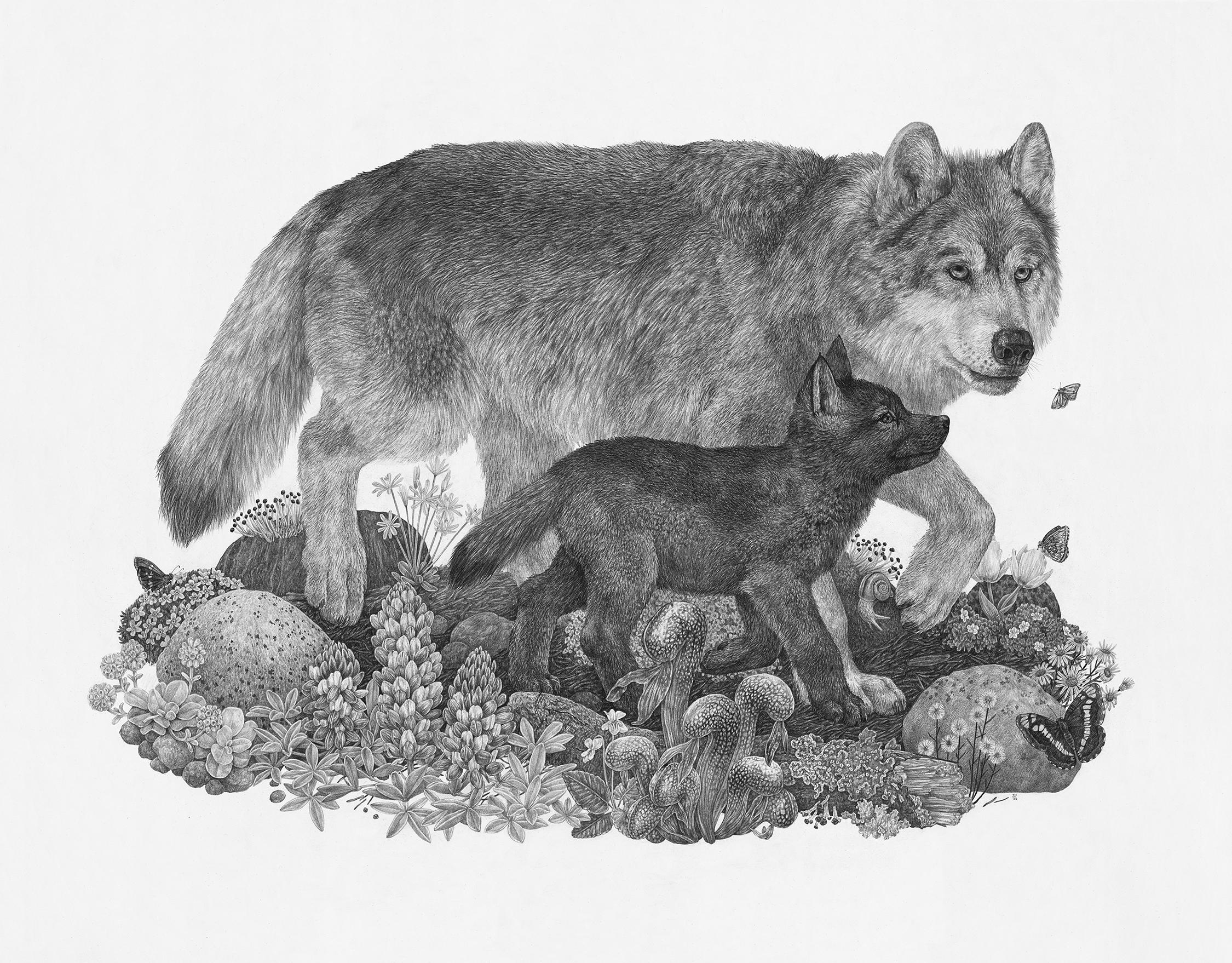 "Wolf, 36"" x 28"", Graphite on paper, 2018"