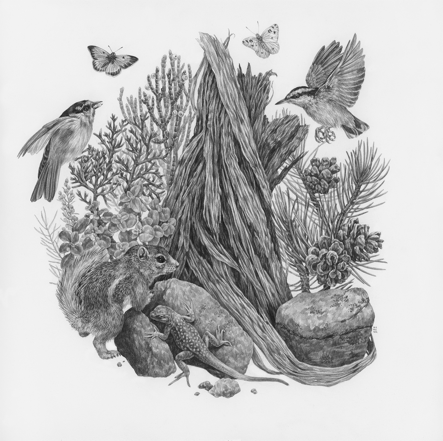 "The Watchman, 12"" x 12"", Graphite on paper, 2019  Click here to purchase through Antler Gallery   SPECIES DEPICTED  White-tailed antelope squirrel, Chickadee, Red-breasted Nuthatch, Singleleaf Pine, Juniper, Roundleaf Buffaloberry, observed but unidentified lizard and butterflies"