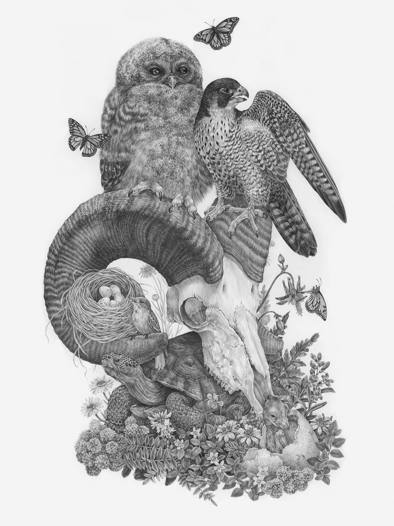 "On The Brink, 18"" x 24"", Graphite on paper, 2019  Sold  SPECIES DEPICTED  Species that were once, or still are at risk within Zion National Park: Mexican Spotted Owlet, Peregrine Falcon, Condor hatchling, Southwestern Willow Flycatcher, Mojave Desert Tortoise, Monarch Butterflies, and nine sensitive plant species."