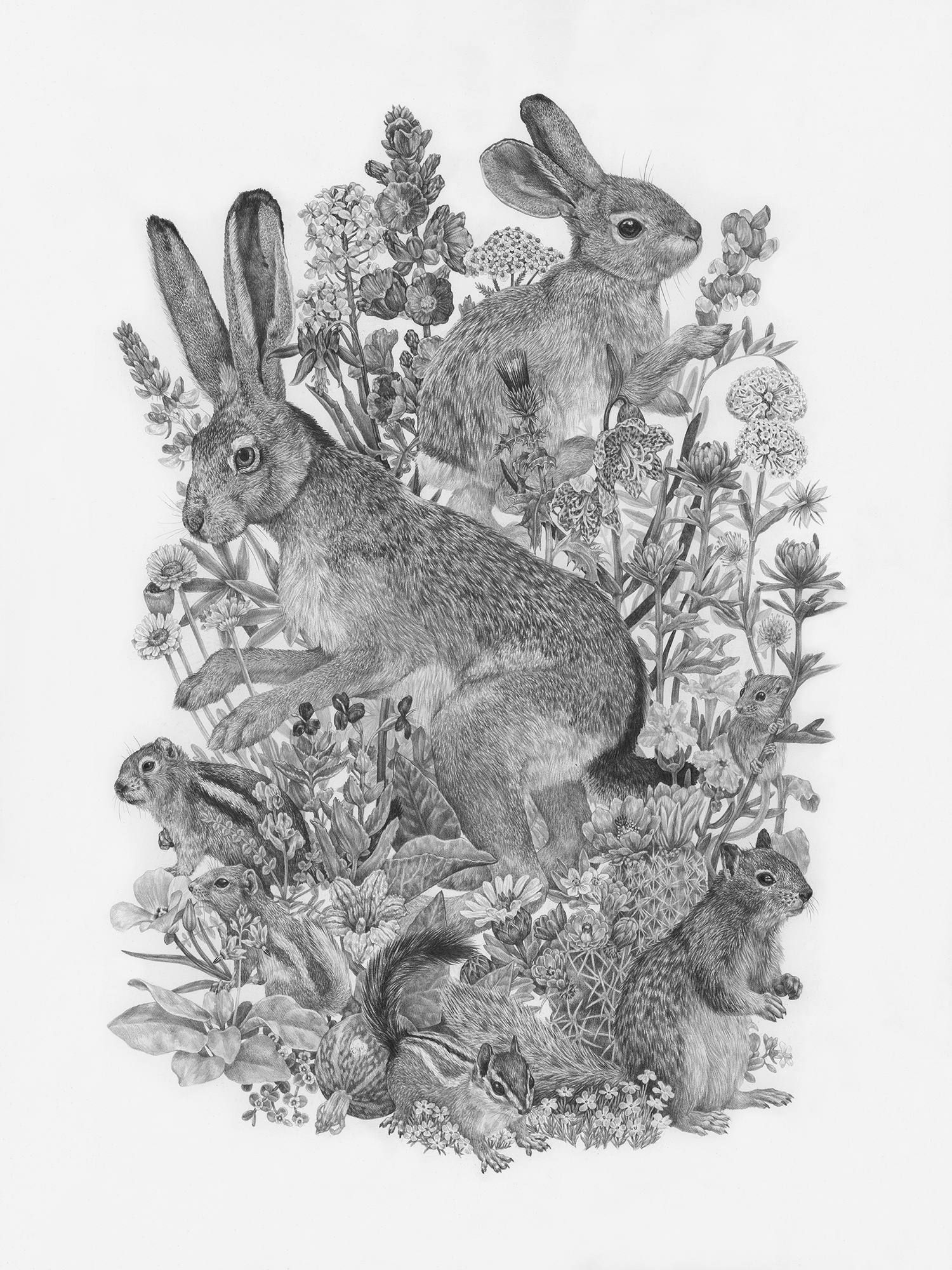 "Common Small Mammals and Wildflowers of Zion National Park, 18"" x 24"", Graphite on paper, 2019  Sold  SPECIES DEPICTED  Black Tailed Jackrabbit, Canyon Mouse, Cliff Chipmunk, Desert Cottontail, Golden-mantled Ground Squirrel, Rock Squirrel, White-tailed Antelope Squirrel and twenty-three plant species."