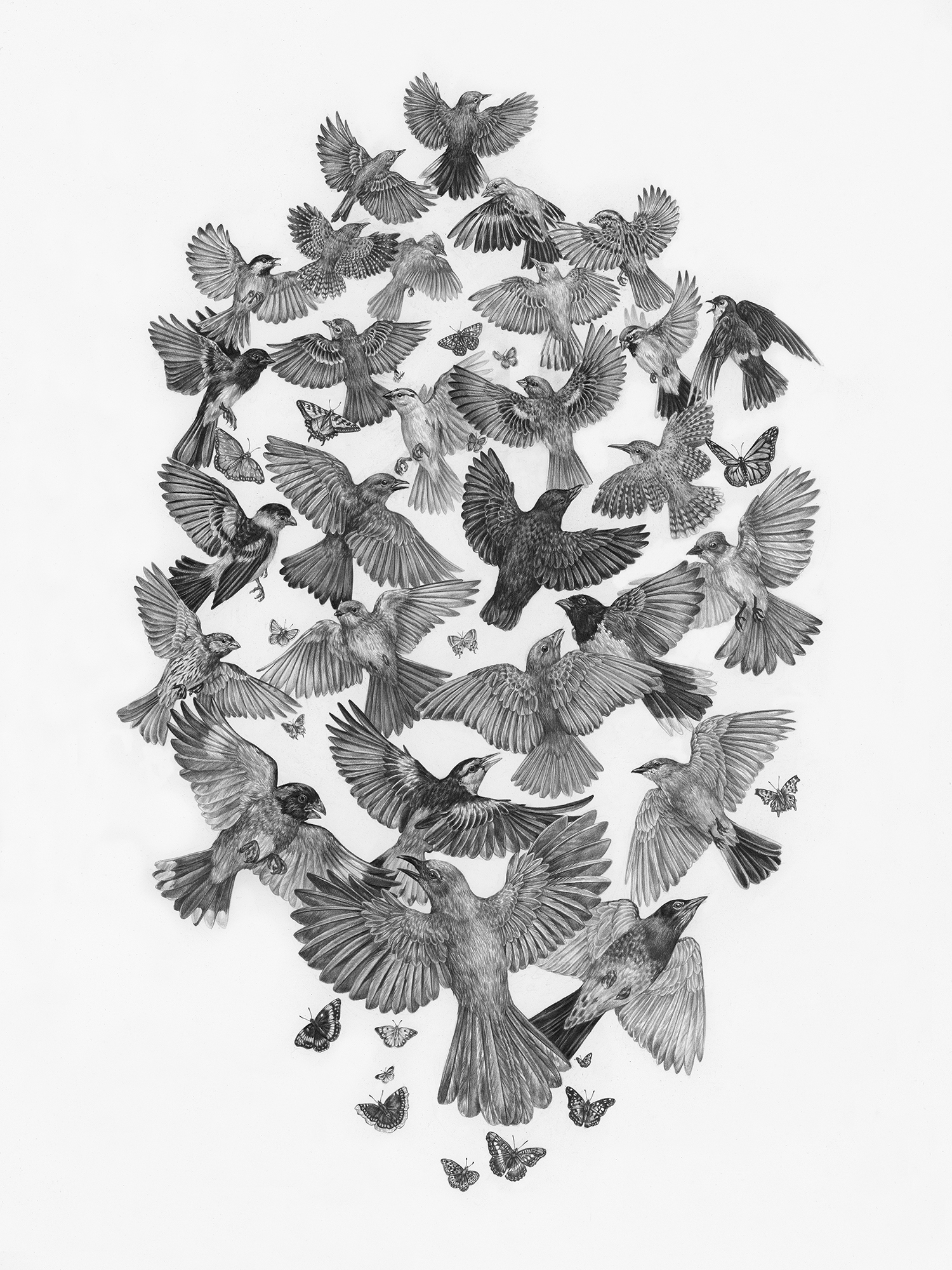 "Common Songbirds and Butterflies of Zion National Park, 18"" x 24"", Graphite on paper, 2019  Sold  SPECIES DEPICTED  Twenty-eight bird species and sixteen butterfly species commonly found in Zion National Park."