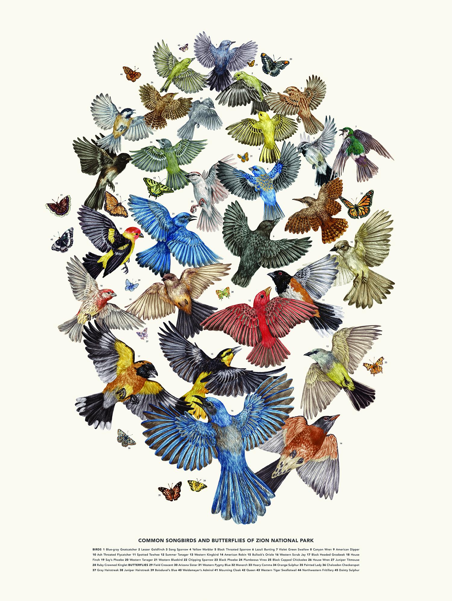 Poster - Birds & Butterflies.jpg
