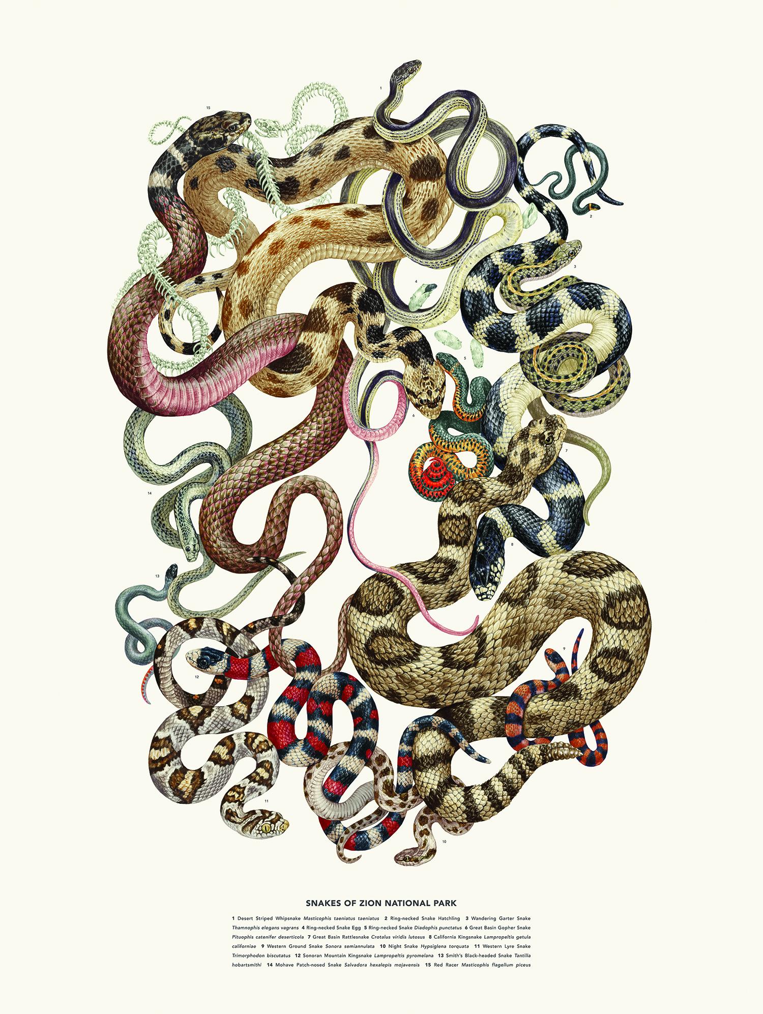 Posters - Snakes.jpg
