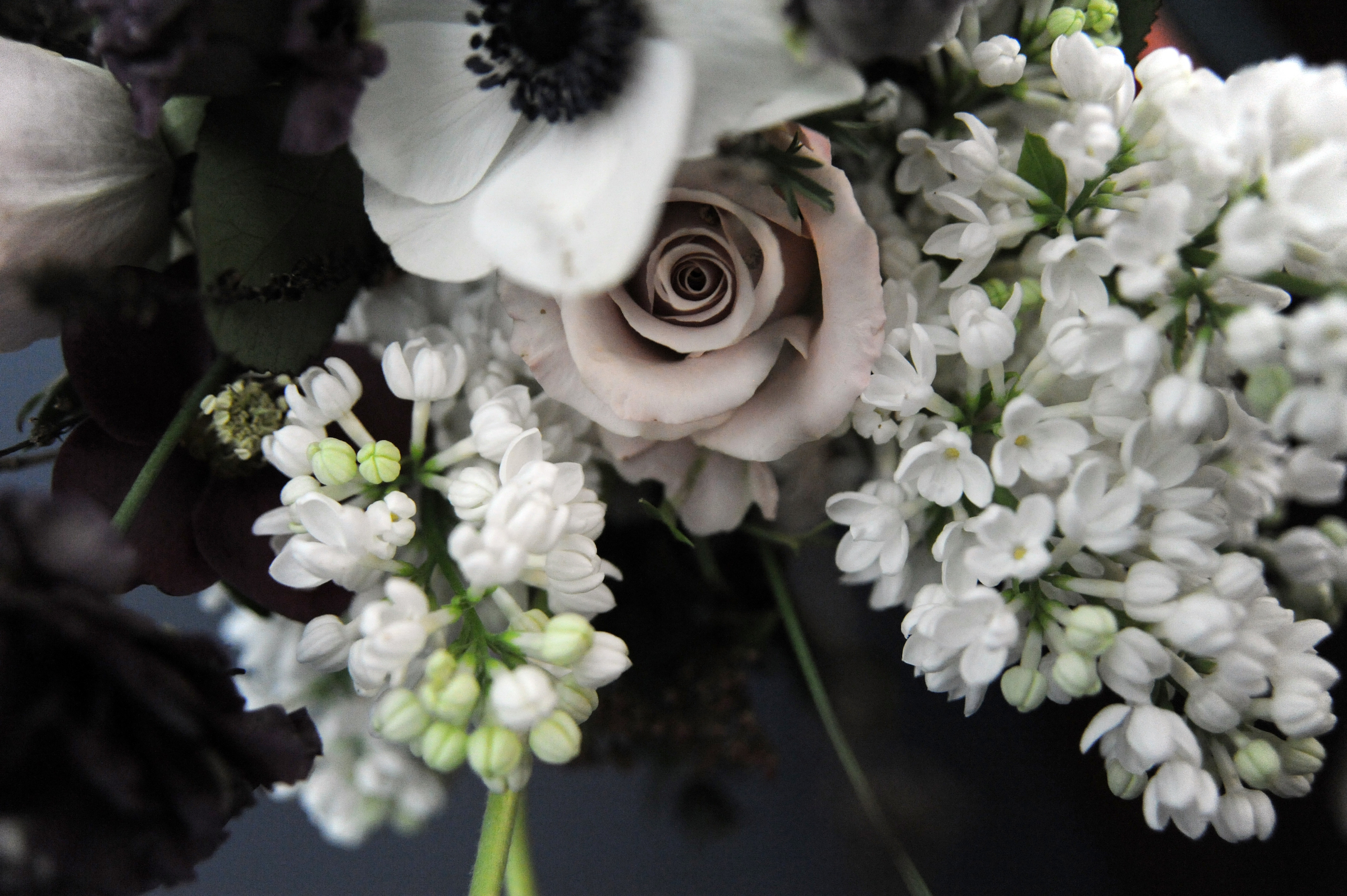A floral arrangement of winter flowers