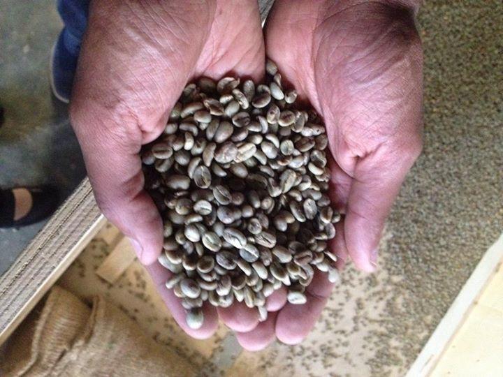 Hands of Mike Mammao. Ethiopian Coffee Exporter, Addis Exports, Photo by Simran Sethi