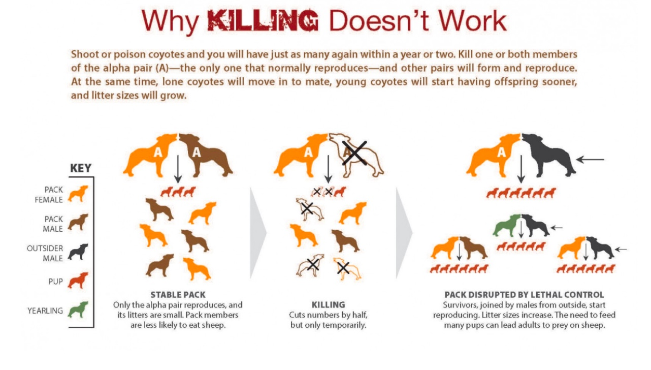 Why Killing Doesn't Work.jpeg