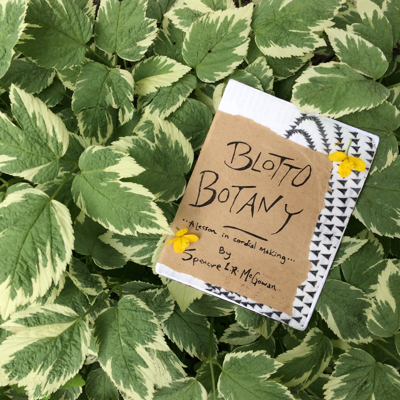 The original Blotto Botany zine