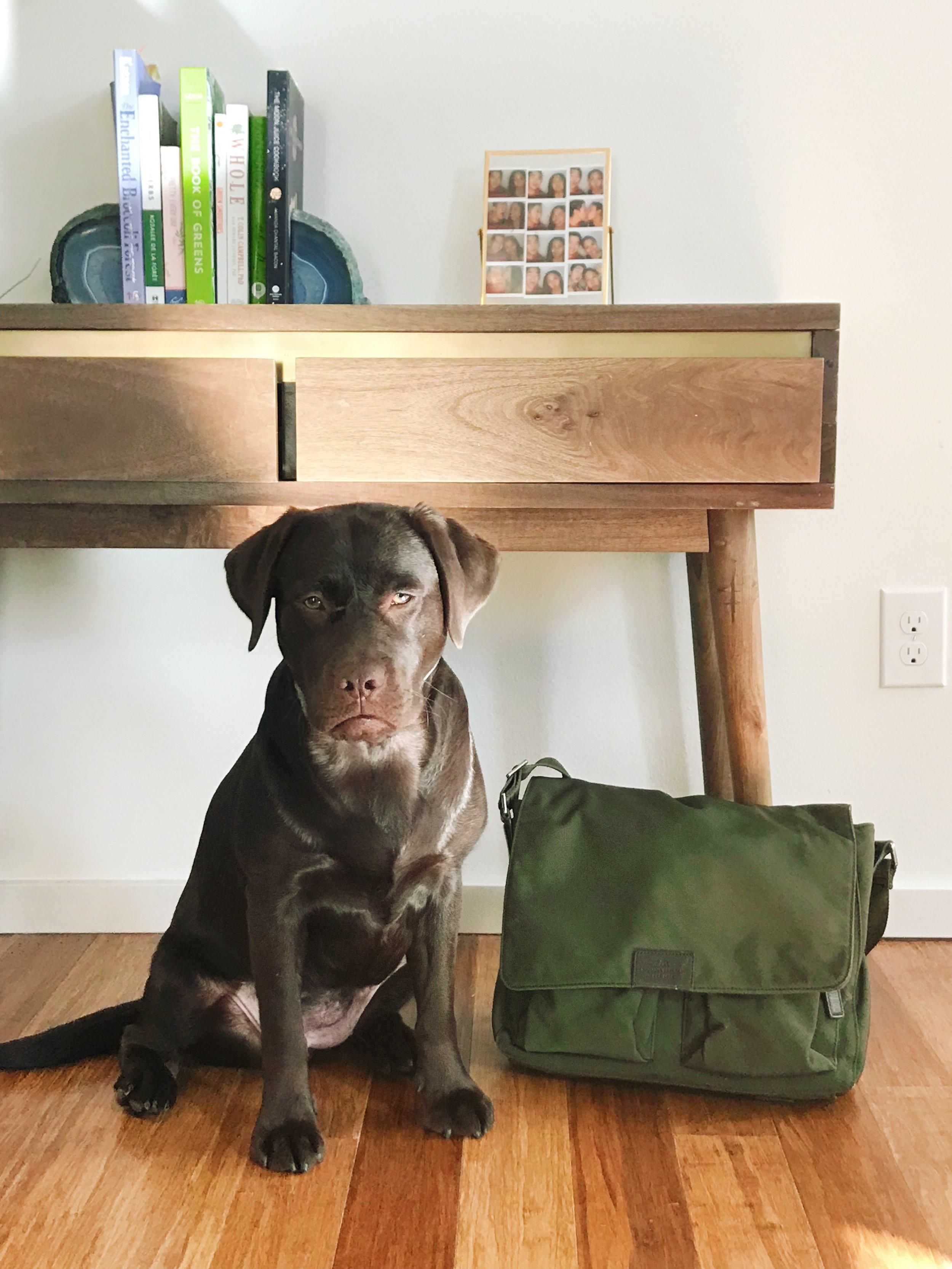 Nadine's pup, Cora