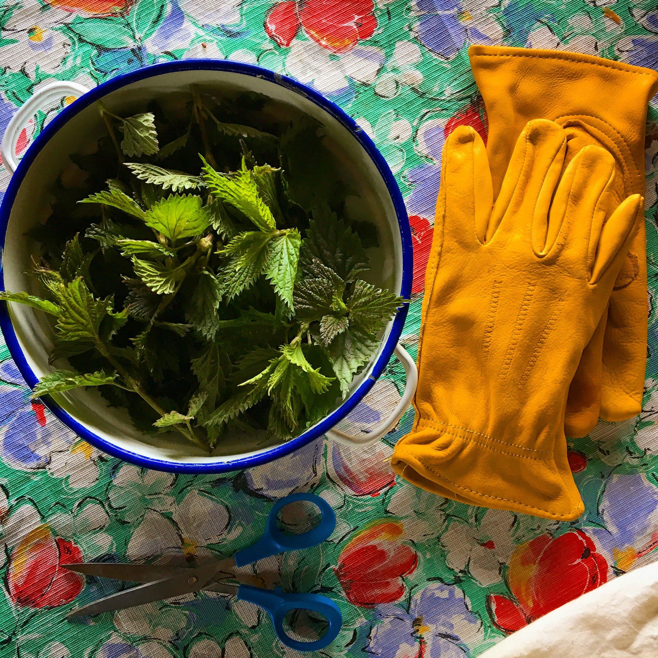 Nettle and Pine Needle Tea