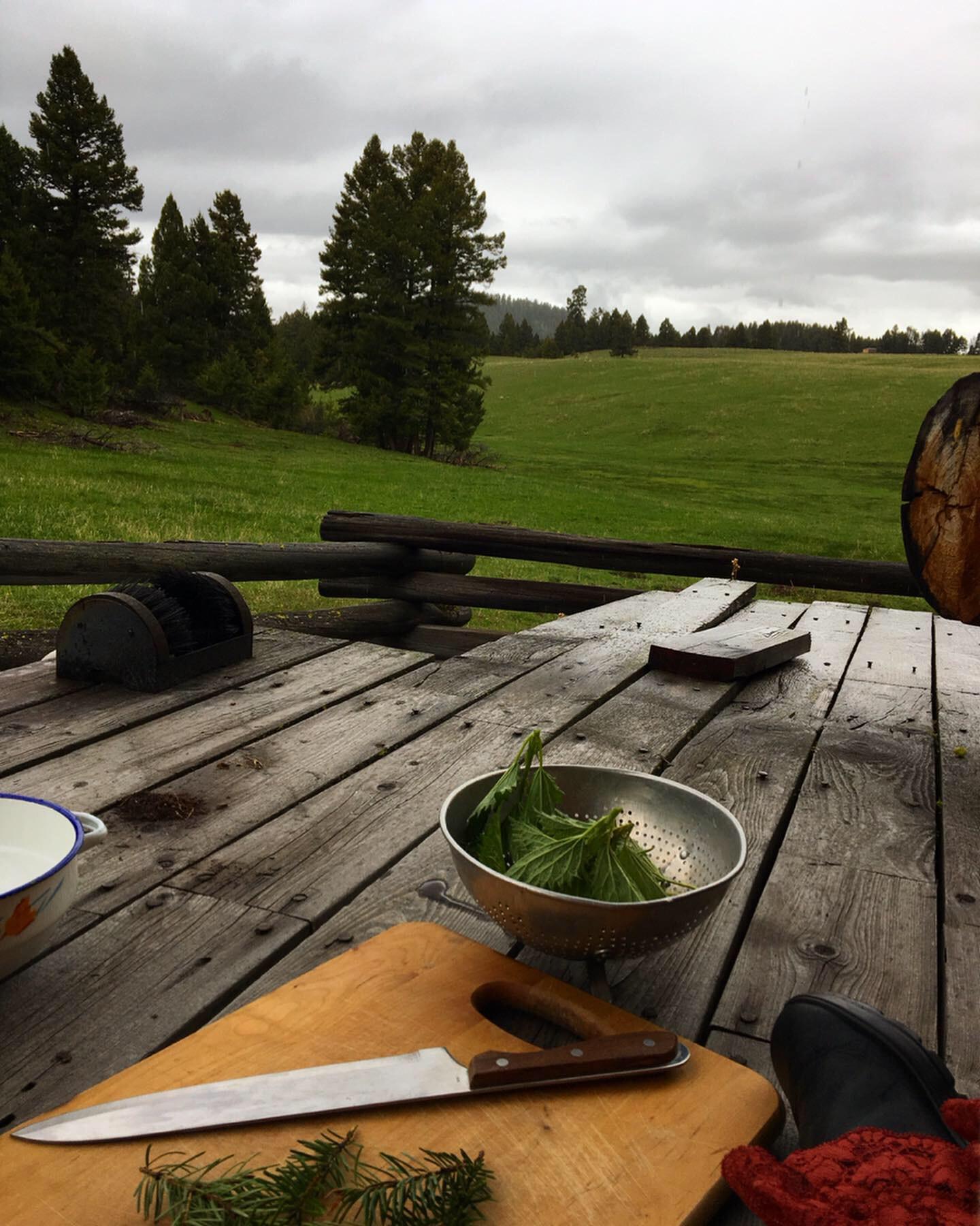 Nettle and Pine Needle Tea — Gingertooth & Twine