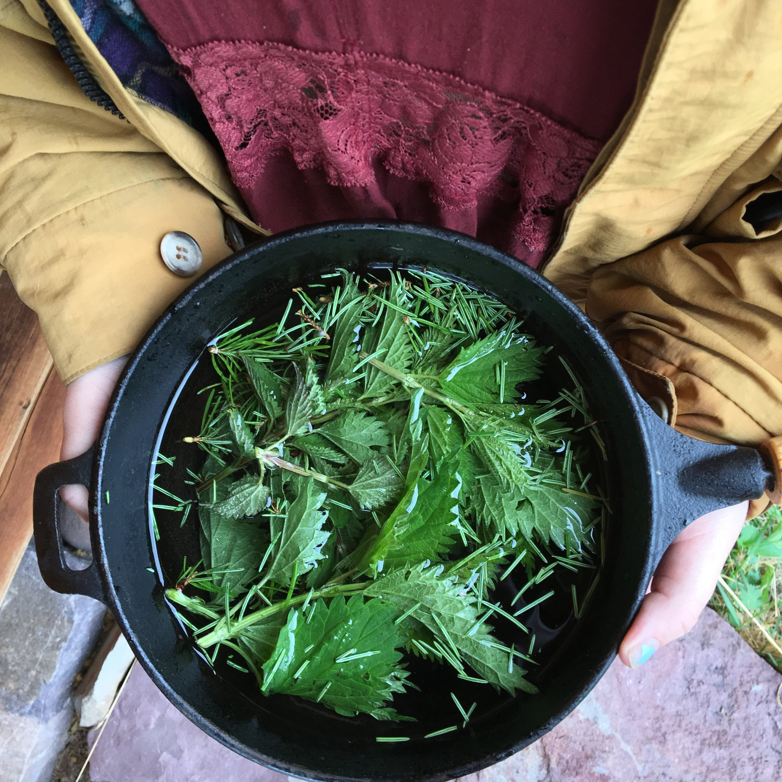Nettle and Pine Needle Tea