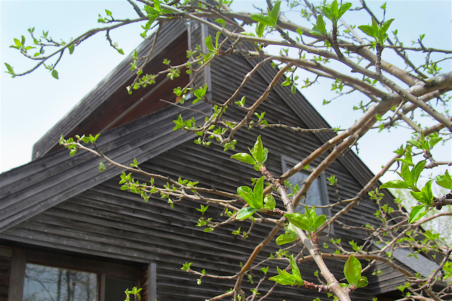 Spring — along with fresh leaves on the crabapple tree...