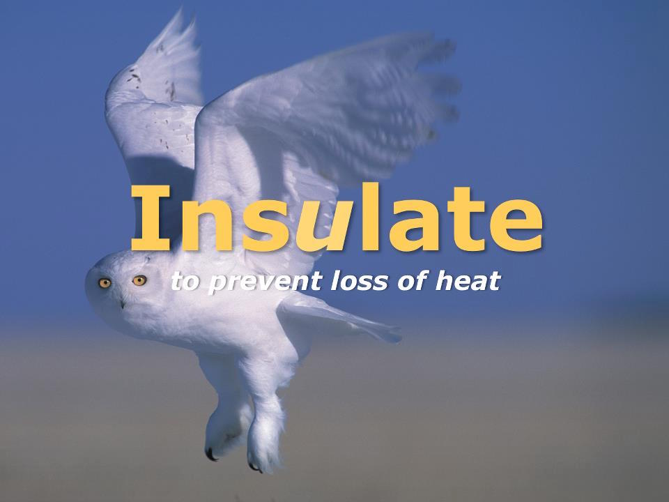 Most people know how  Insulation  works to prevent the loss of heat. Mammals grow thicker fur in winter, birds fluff up their down when it's cold, and a deep blanket of snow acts as a protective layer for the earth. Efficient low-energy housing starts with air-tight construction and good insulation.