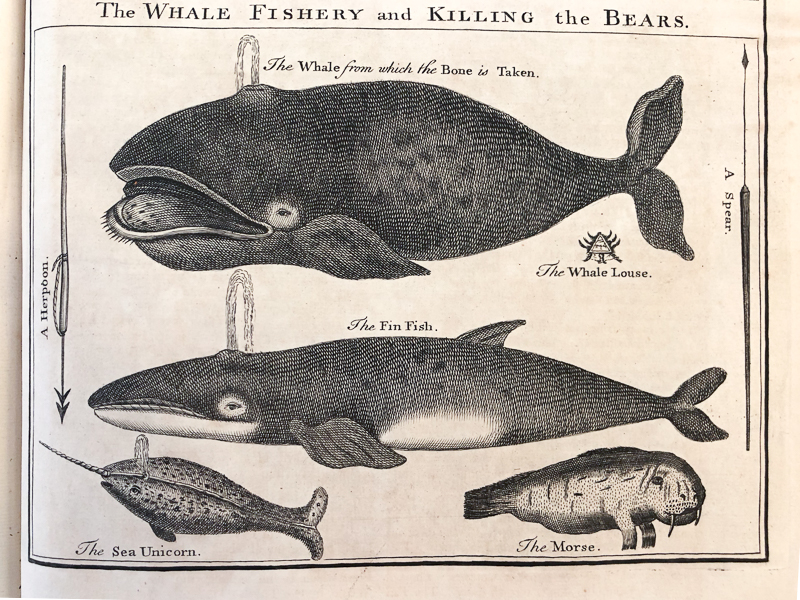 """Notice the """"sea unicorn"""" is a narwhal whale and """"the Morse"""" is a walrus (strangely crude compared to the whale renderings) ."""