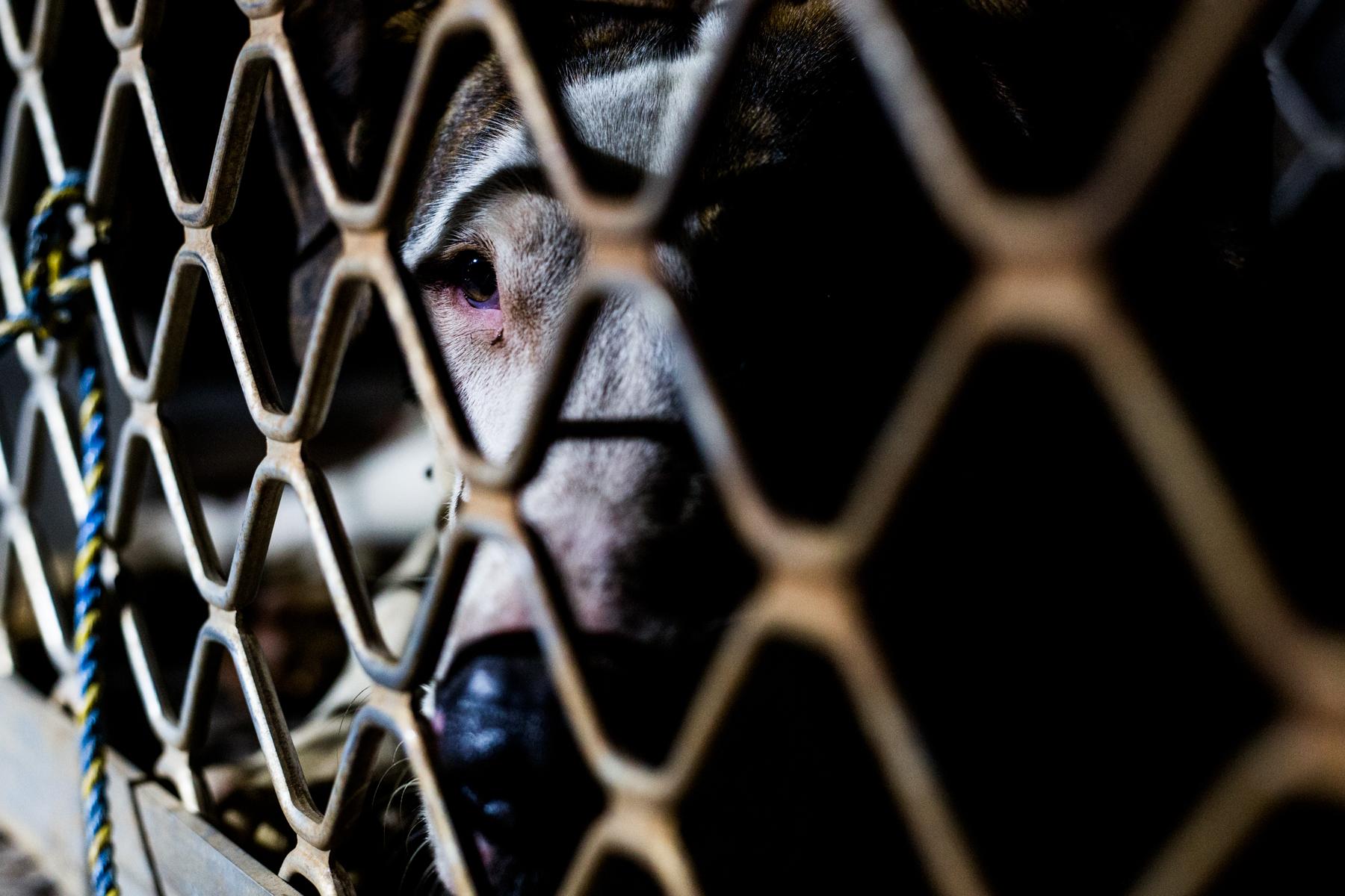 PigHunting-29.jpg