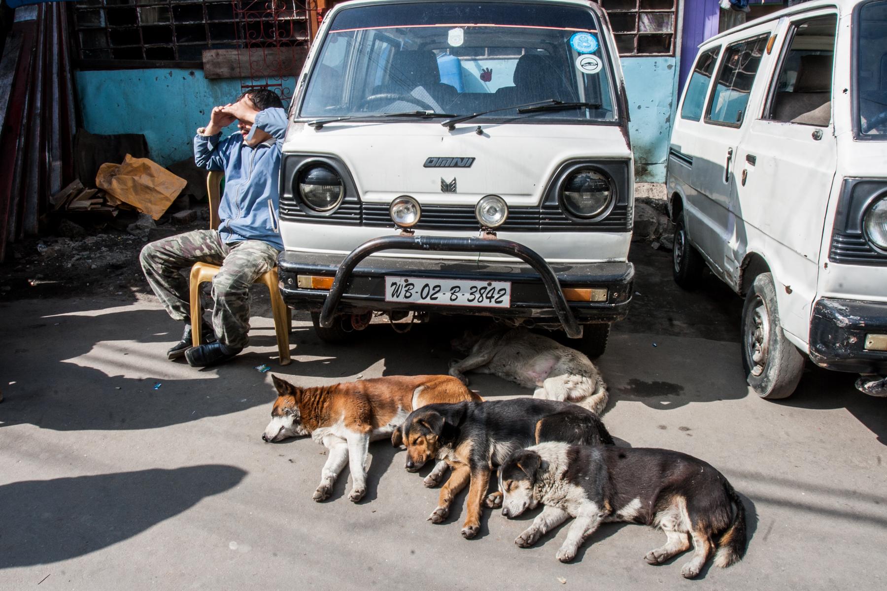 Darjeeling_486.jpg