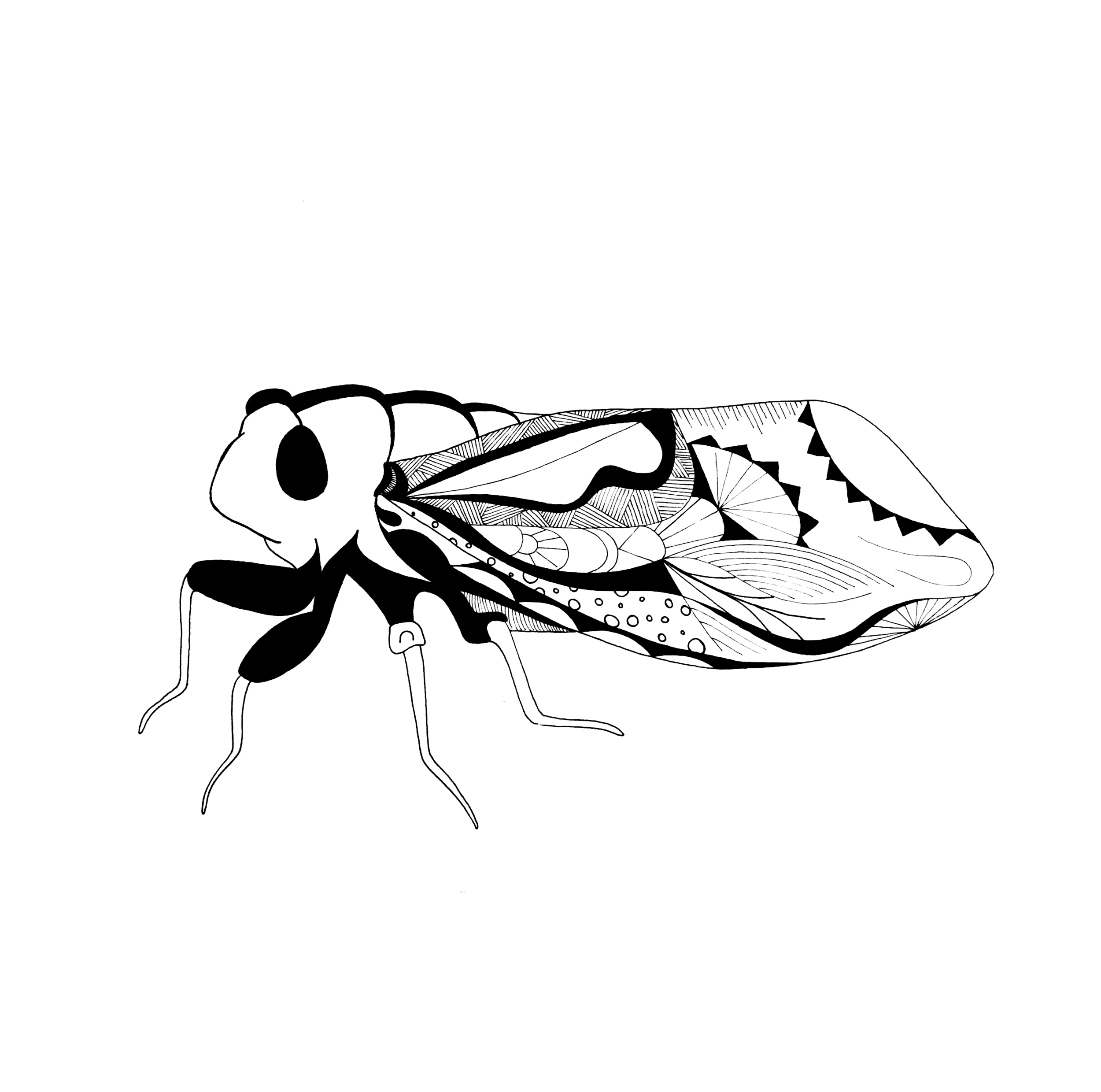Cicada.png