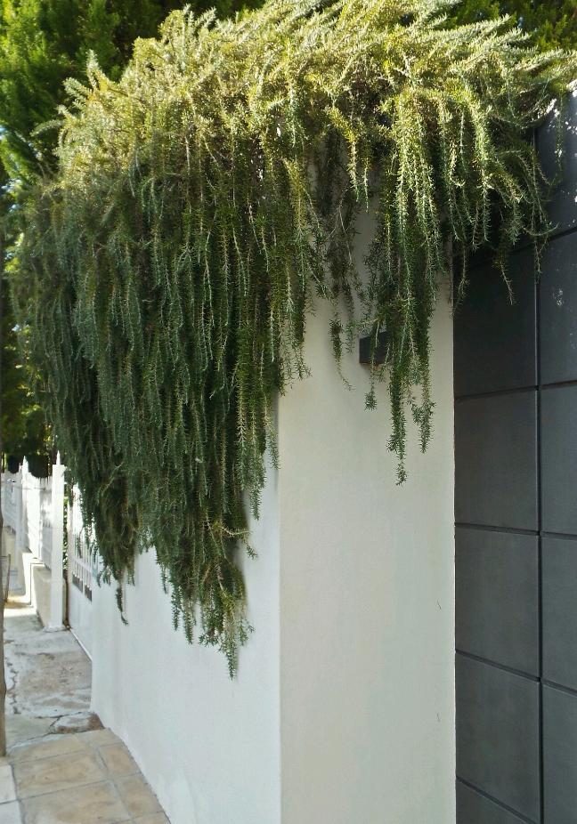 gardenersbox.tumblr.com