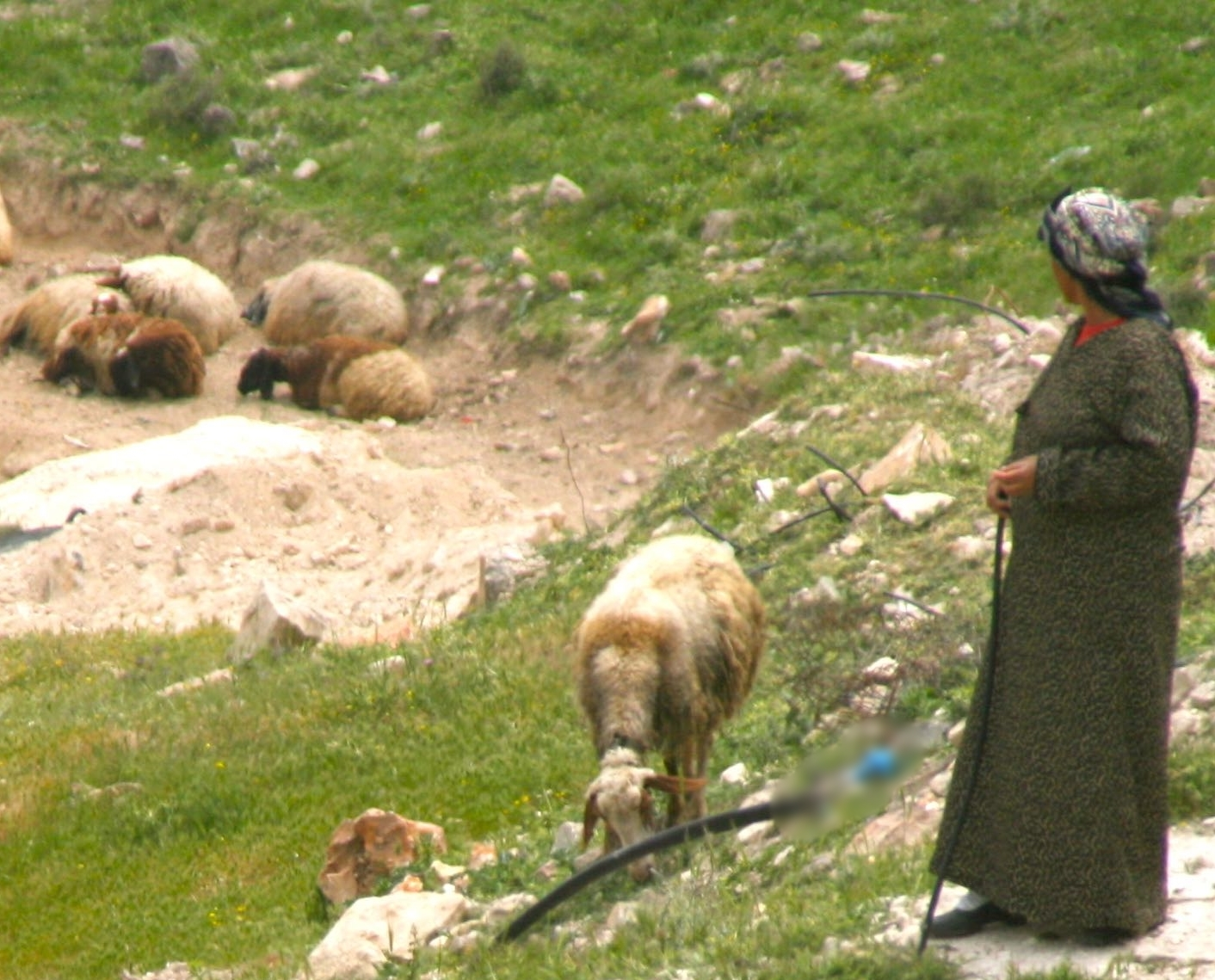 Shepherdess near Jerusalem