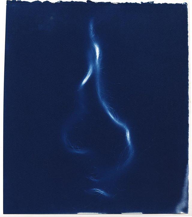 Scanning some work I made a few months ago, from a series I did on my body. Cyanotype photogram, on hand-coated paper. #cyanotype #photogram #cameralessphotography #altprocess #alternativeprocess #historicalprocess #annaatkinsvibes #art #feministart #womenartists #prussianblue #potassiumferricyanide #makeprintsnotpixels #makeartstaybroke #oneofakind @gallery1of1 #processart #showyourbones #ritphoto