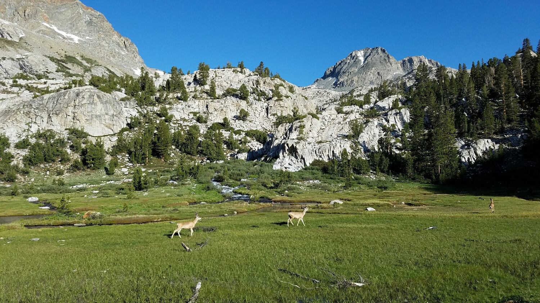 just some deer, roaming free