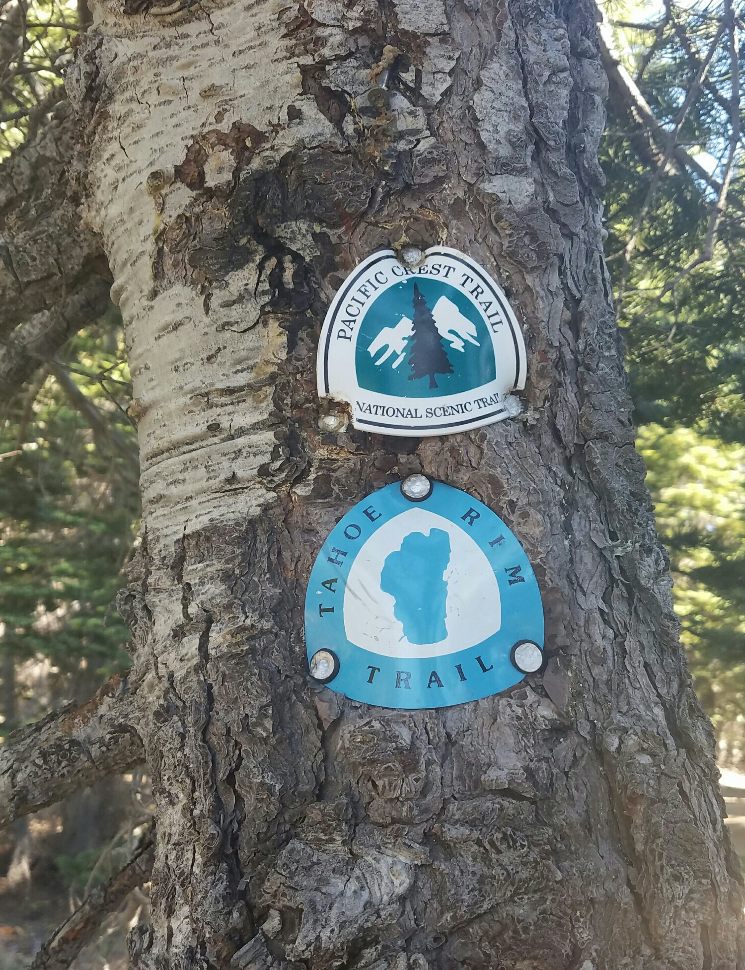 part of the PCT was also the Tahoe Rim Trail